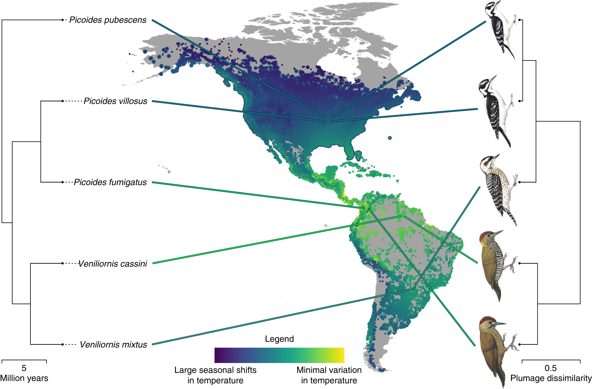 Ecological and geographical overlap drive plumage evolution