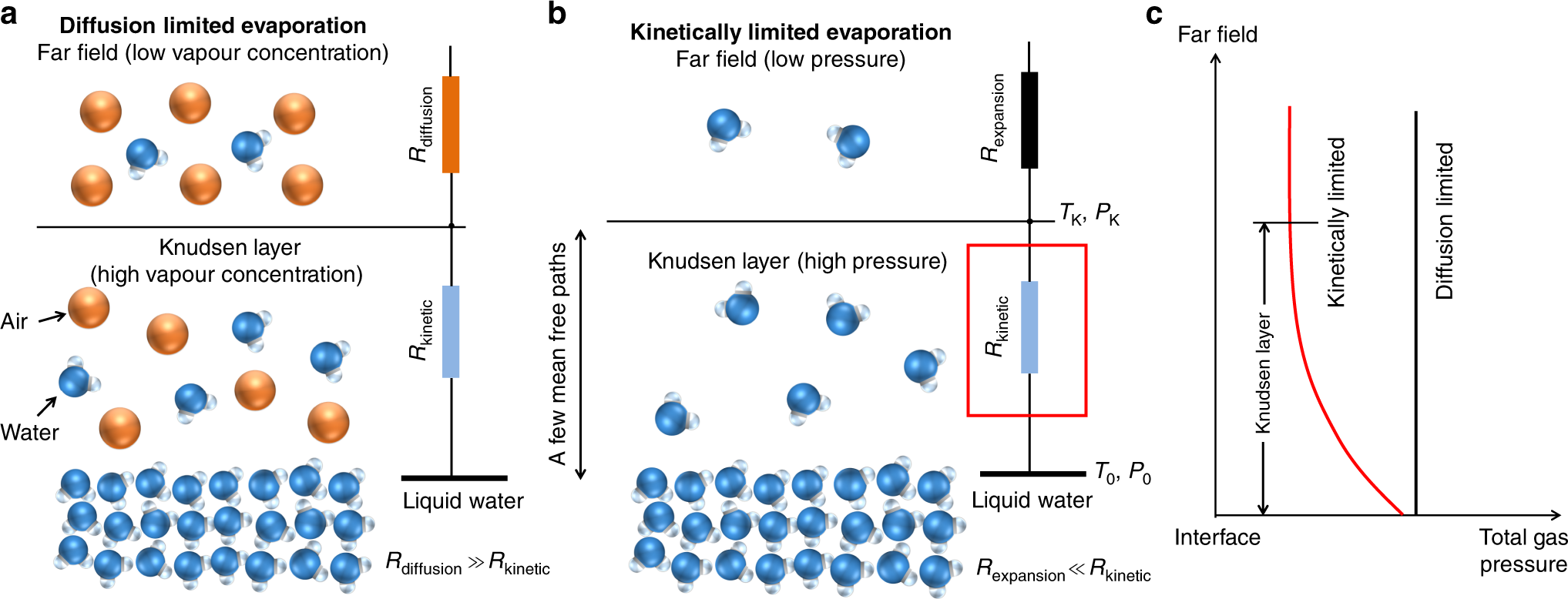 A unified relationship for evaporation kinetics at low Mach