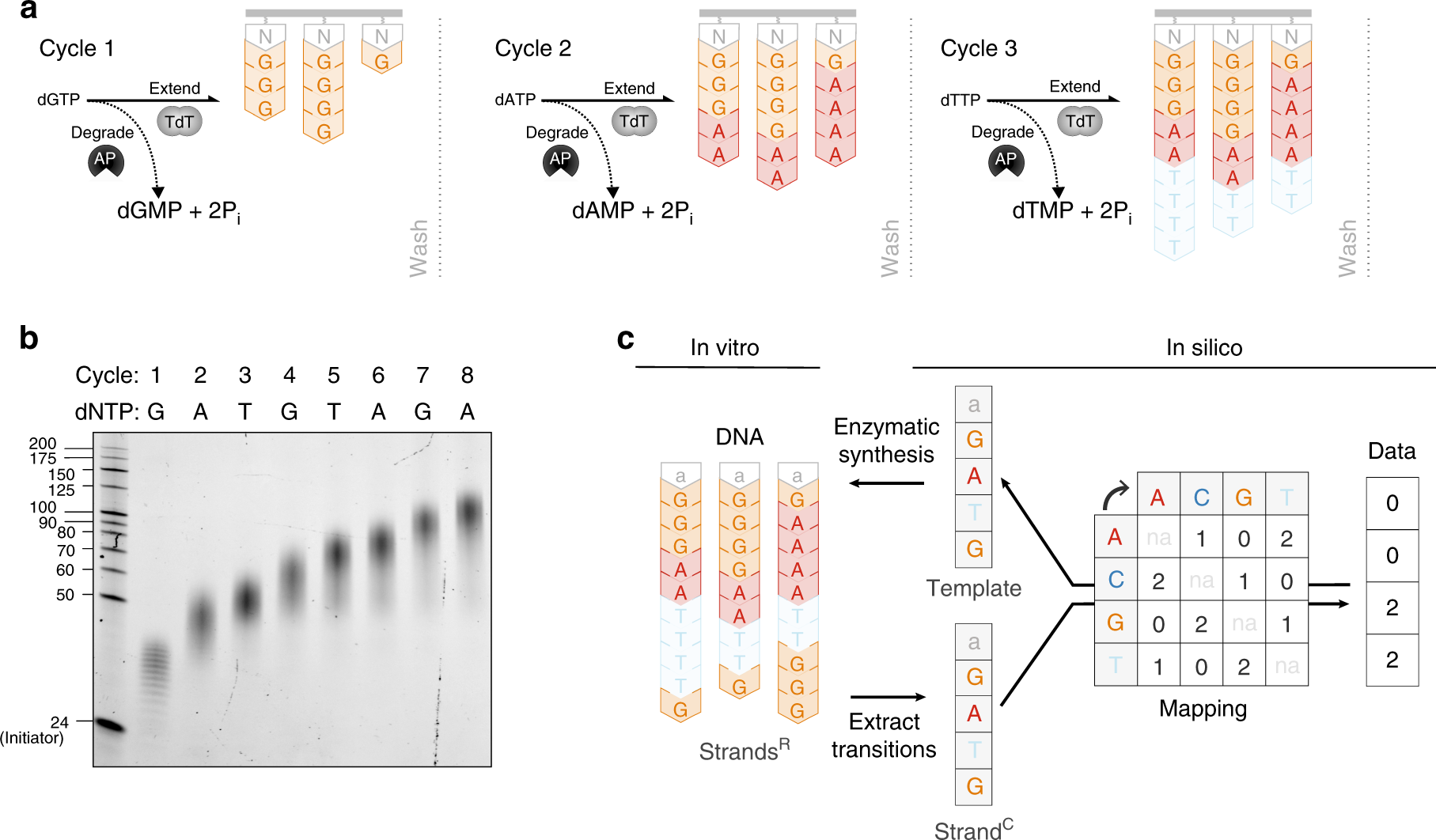 Terminator-free template-independent enzymatic DNA synthesis for
