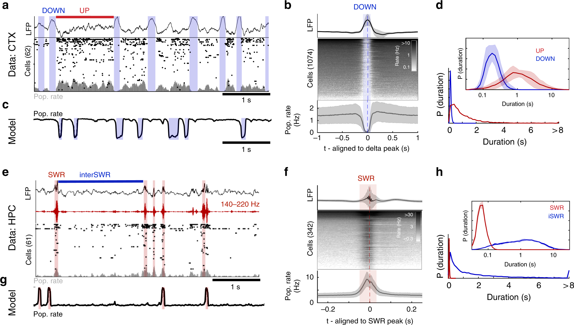 NREM sleep in the rodent neocortex and hippocampus reflects