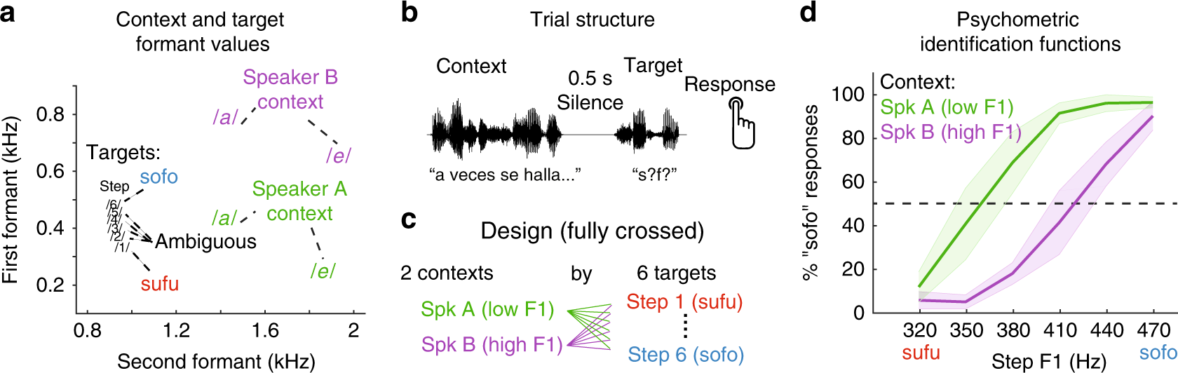 Speaker-normalized sound representations in the human