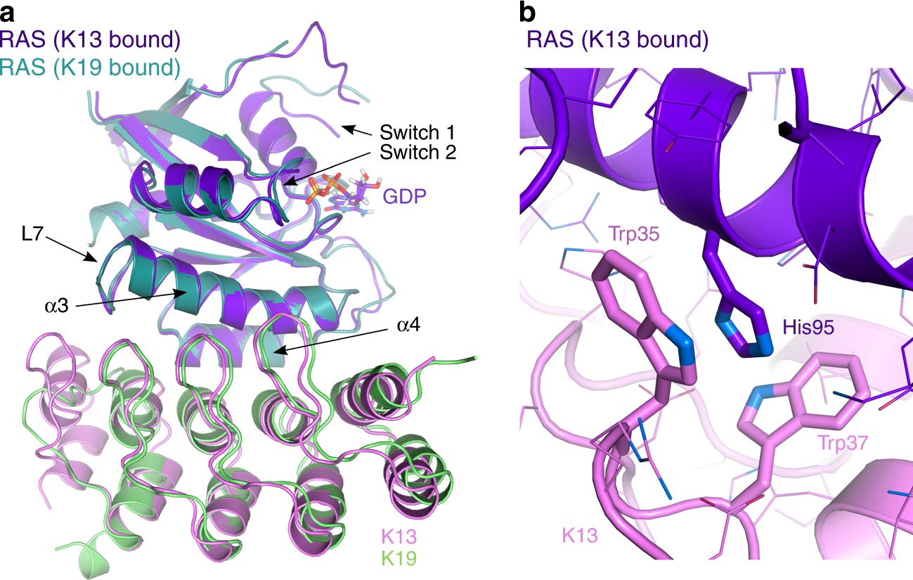 KRAS-specific inhibition using a DARPin binding to a site in