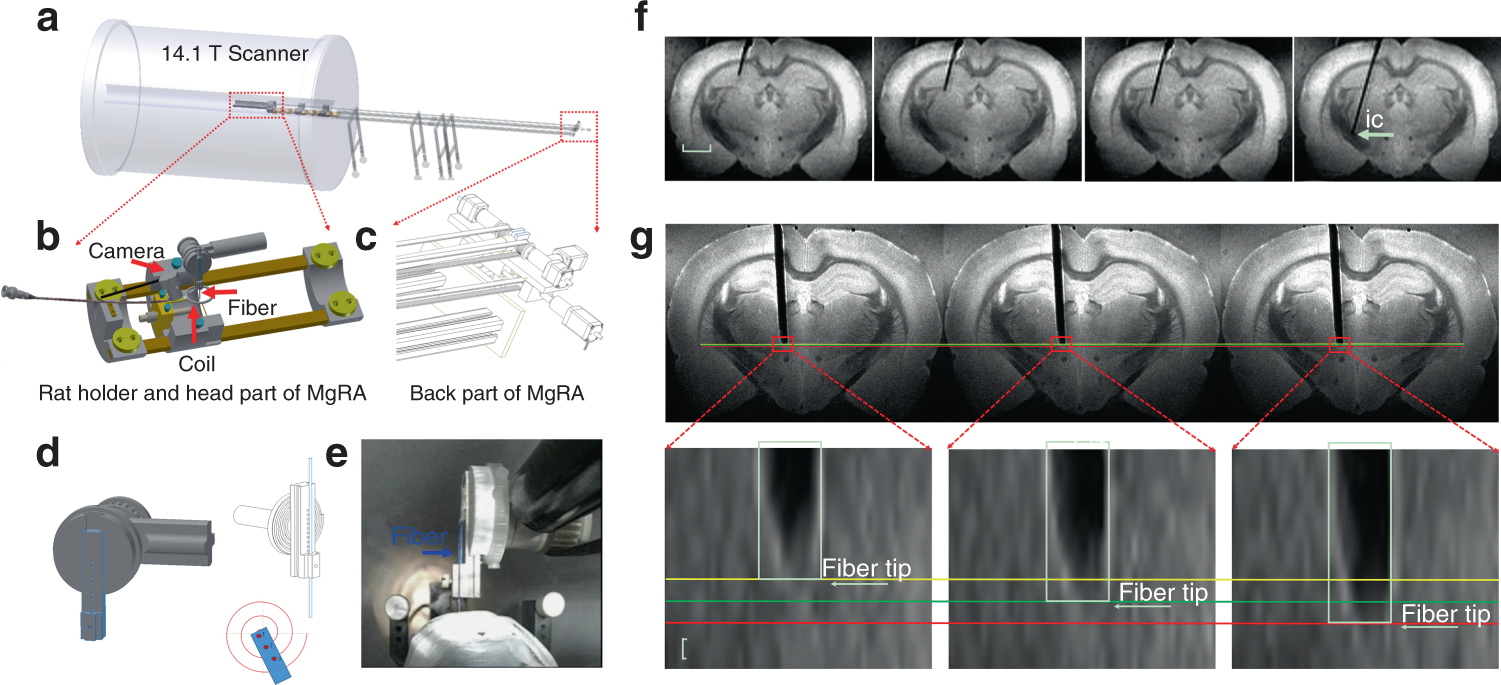 MRI-guided robotic arm drives optogenetic fMRI with