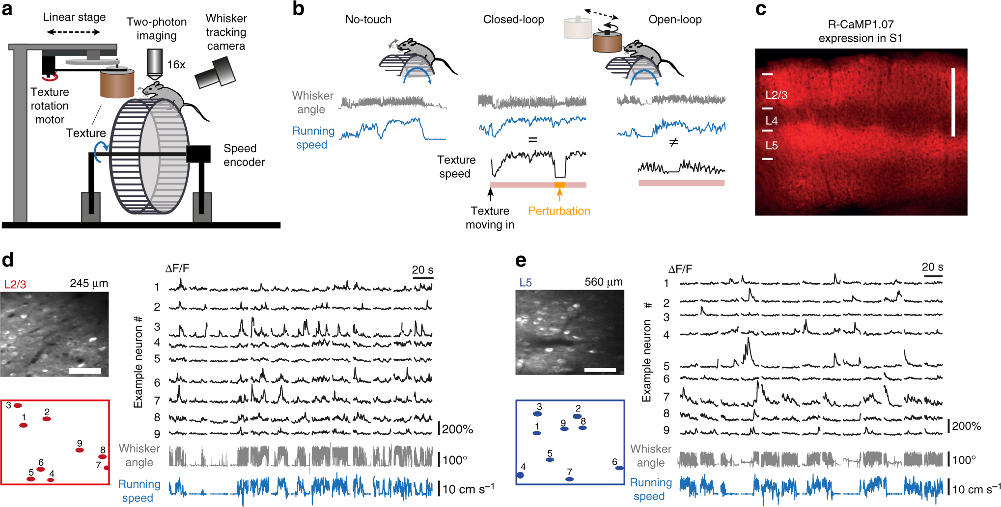 Layer-specific integration of locomotion and sensory