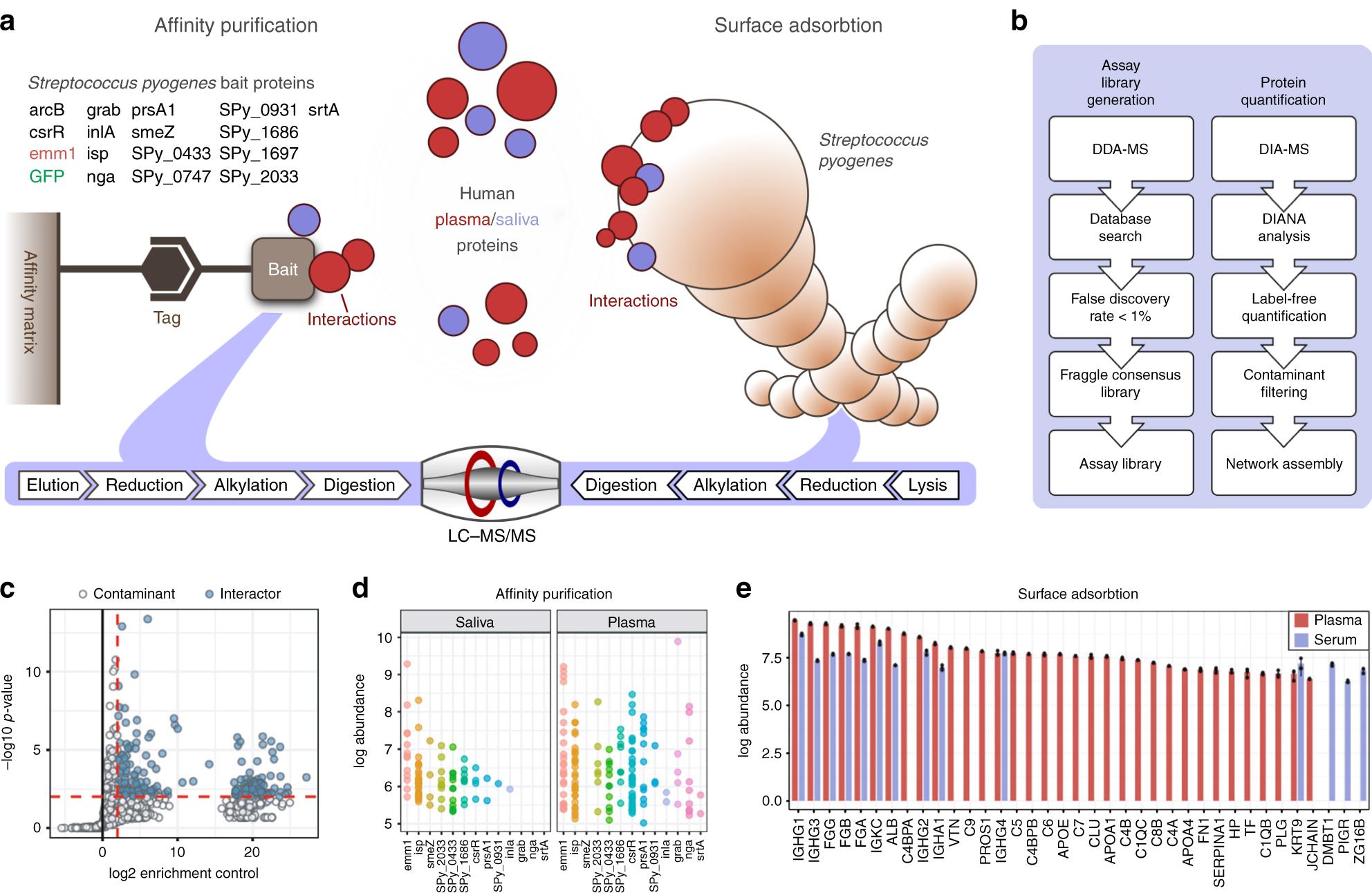 A quantitative Streptococcus pyogenes –human protein–prote