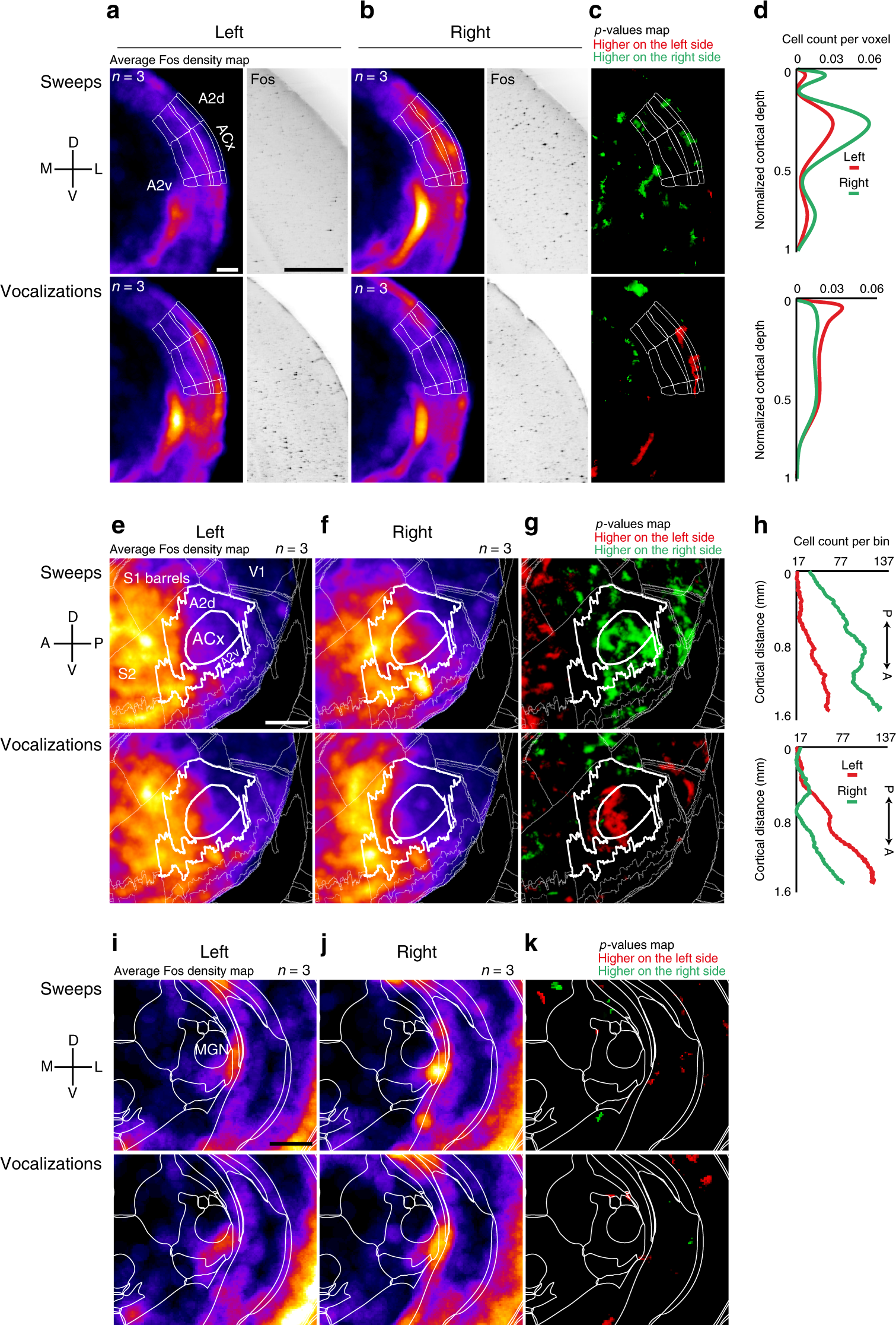 3d Map Of Mouse Neurons Reveals Complex Connections Nature >> Circuit Asymmetries Underlie Functional Lateralization In The Mouse