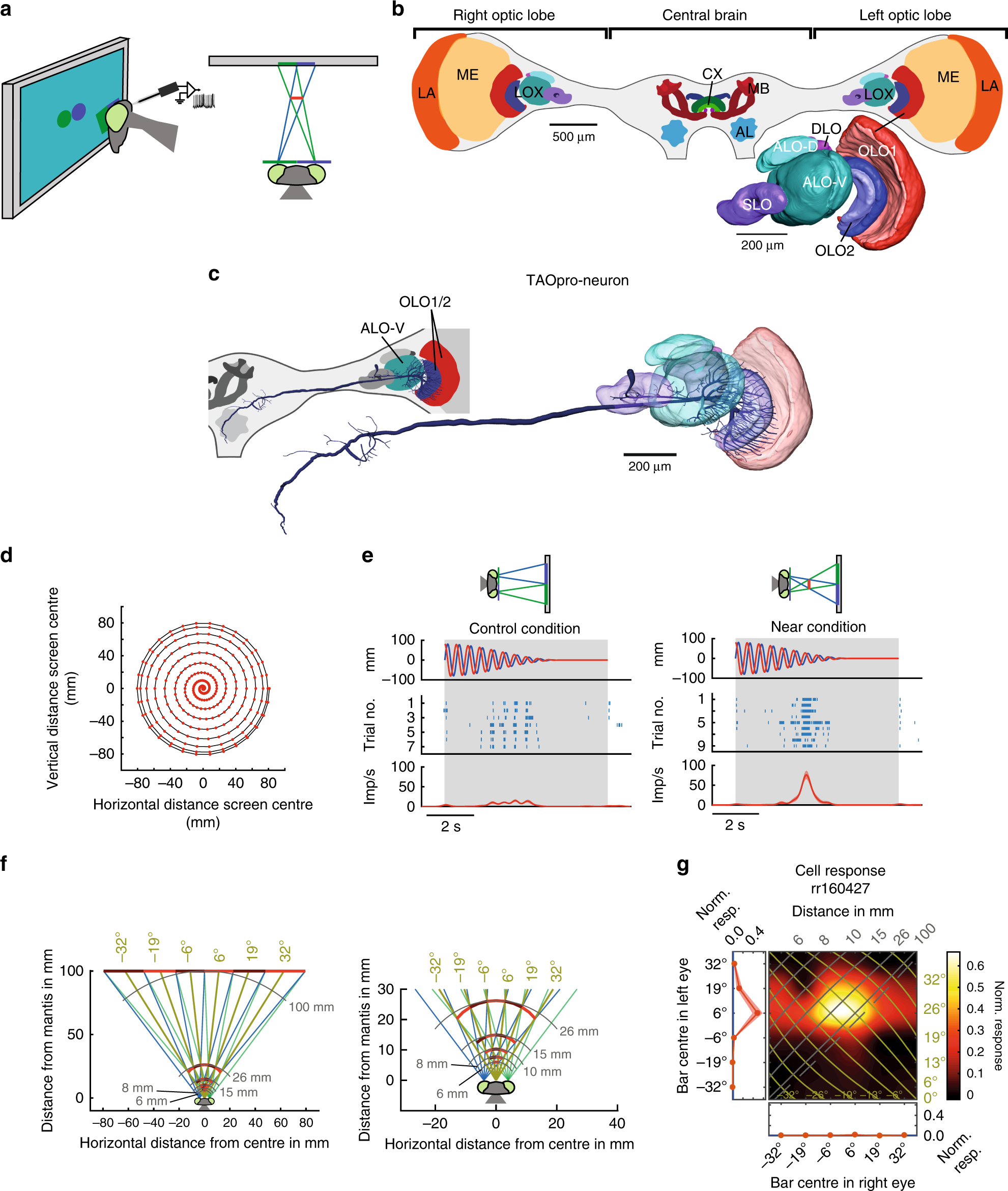 Research Identifies Complex Of Neurons >> A Neuronal Correlate Of Insect Stereopsis Nature