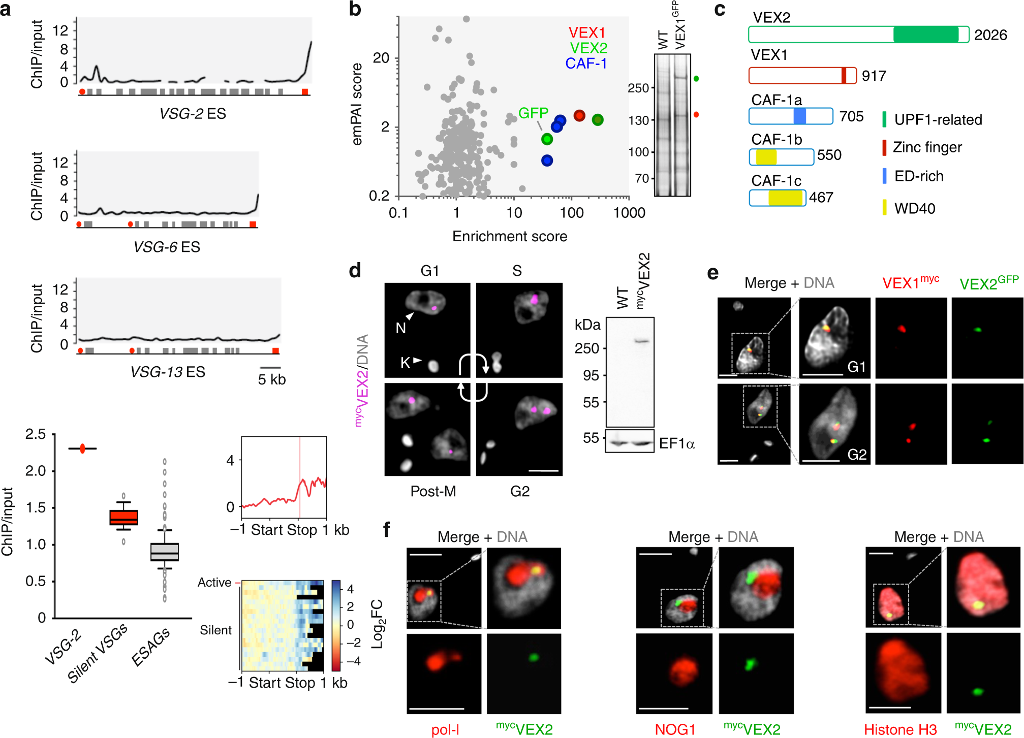 Monoallelic expression and epigenetic inheritance sustained by a