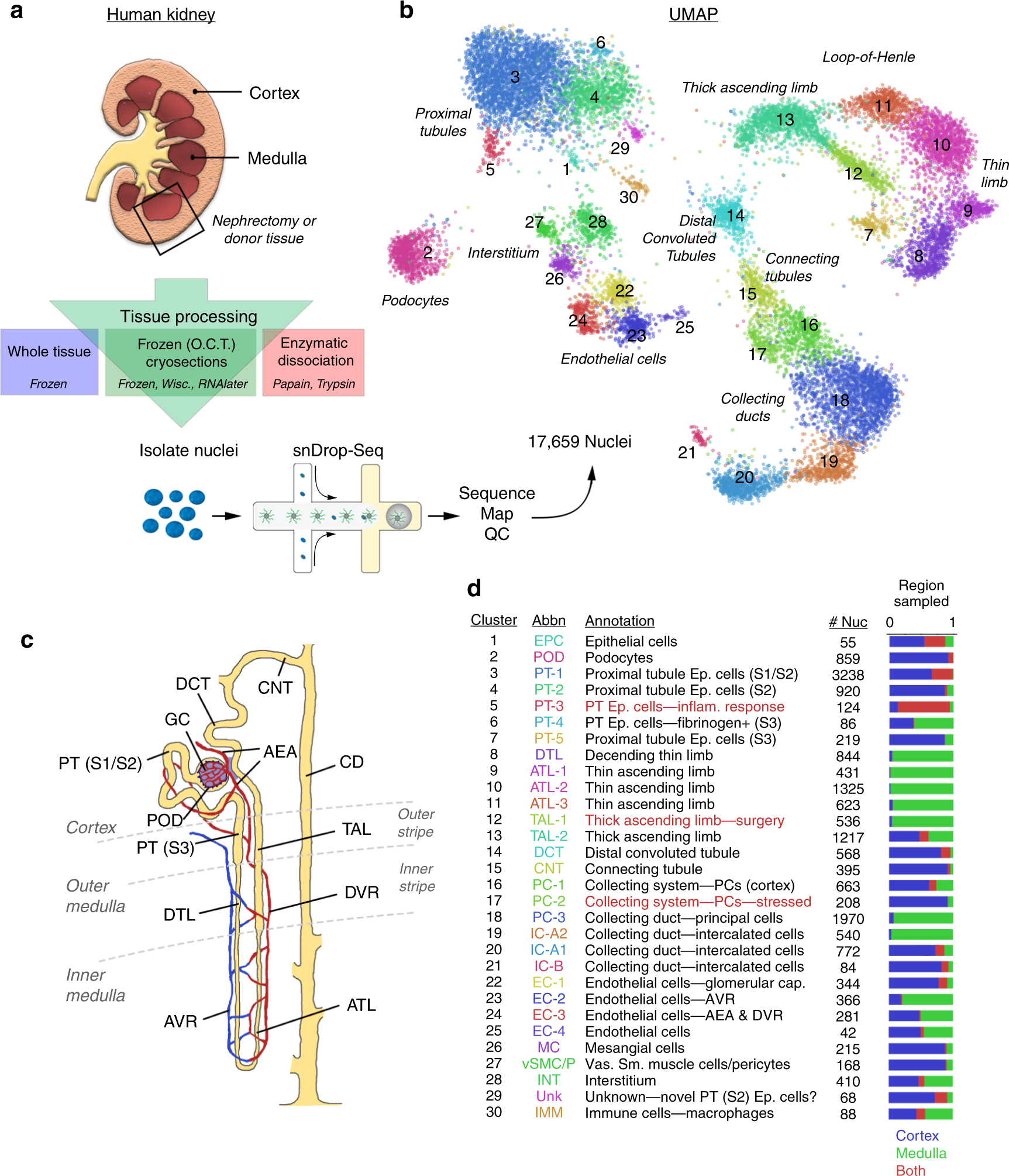 A single-nucleus RNA-sequencing pipeline to decipher the