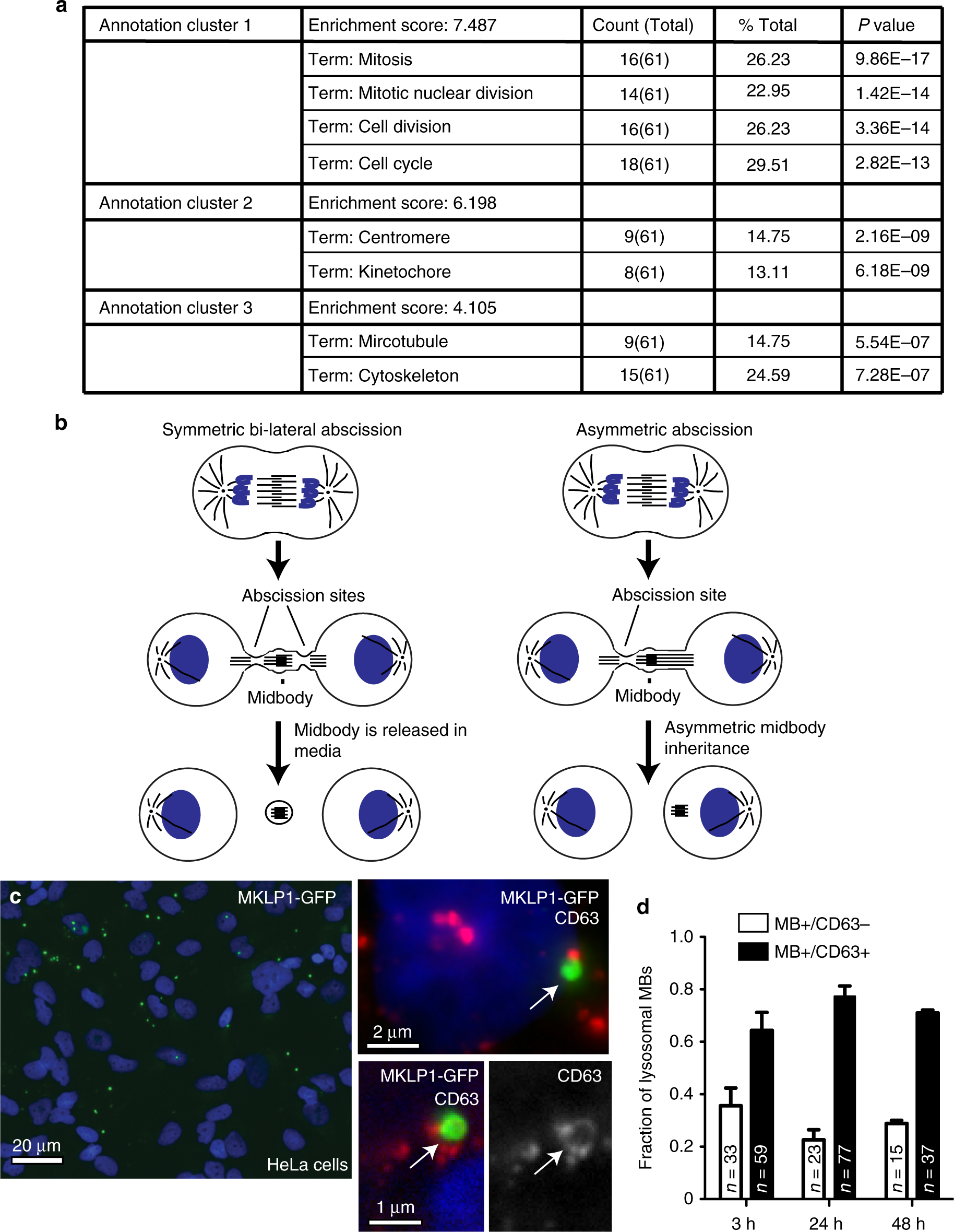 The post-abscission midbody is an intracellular signaling organelle