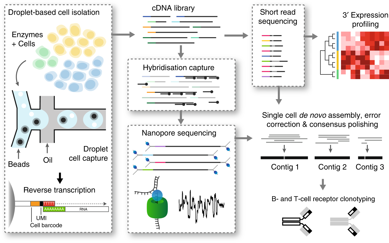 High-throughput targeted long-read single cell sequencing