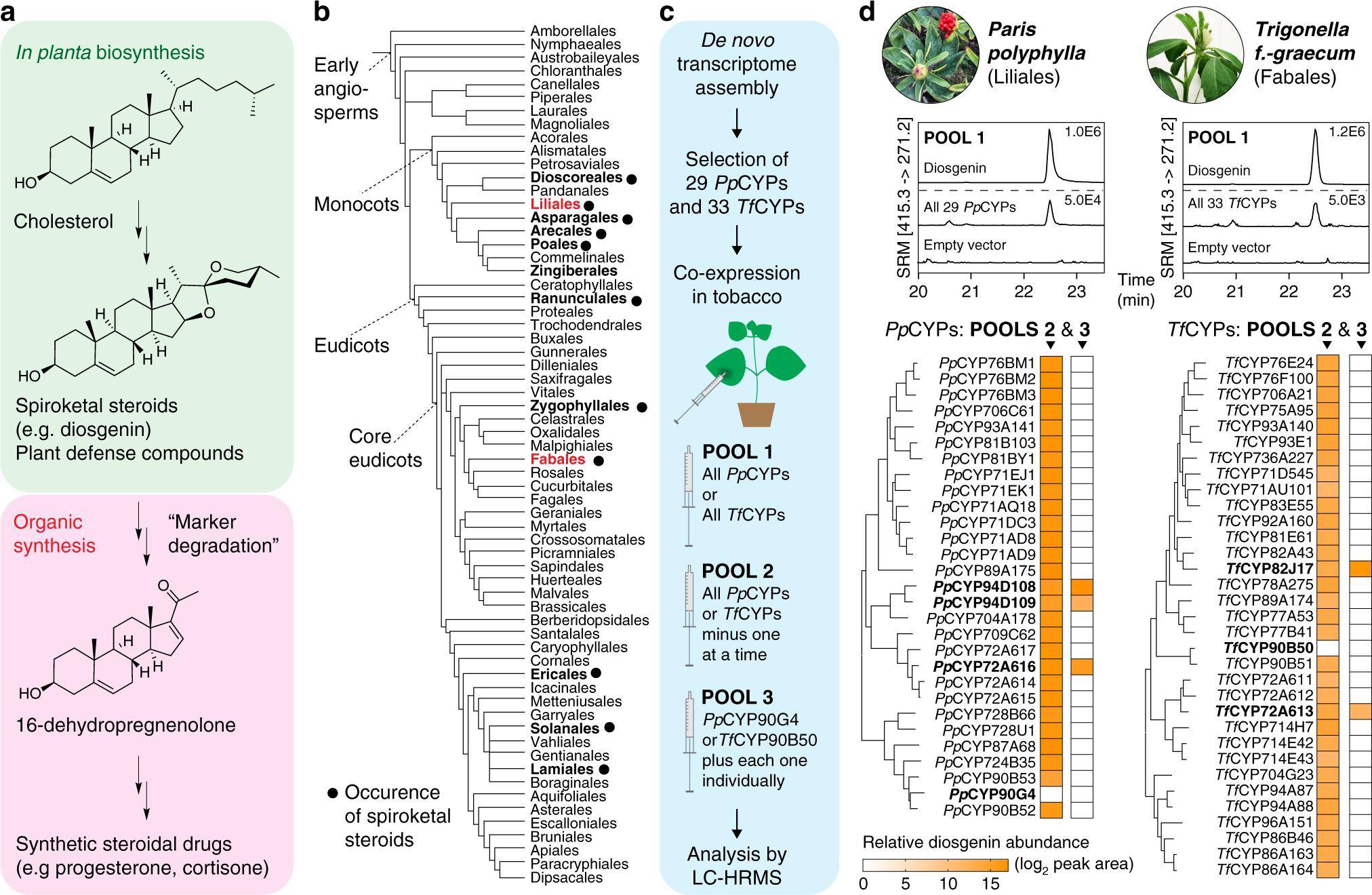Repeated evolution of cytochrome P450-mediated spiroketal