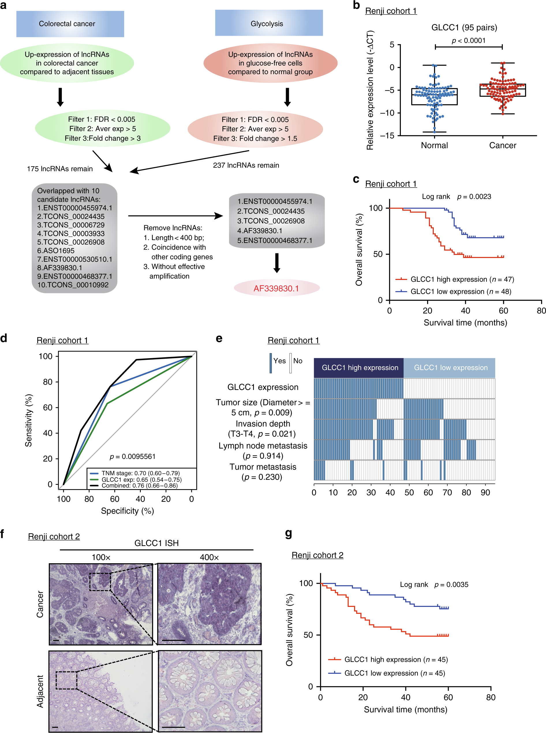 LncRNA GLCC1 promotes colorectal carcinogenesis and glucose