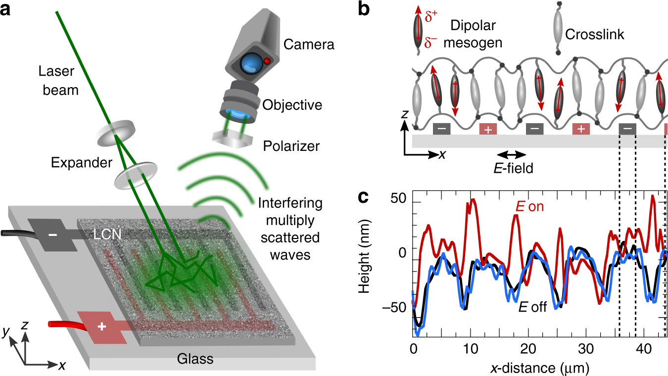 Morphing of liquid crystal surfaces by emergent collectivity