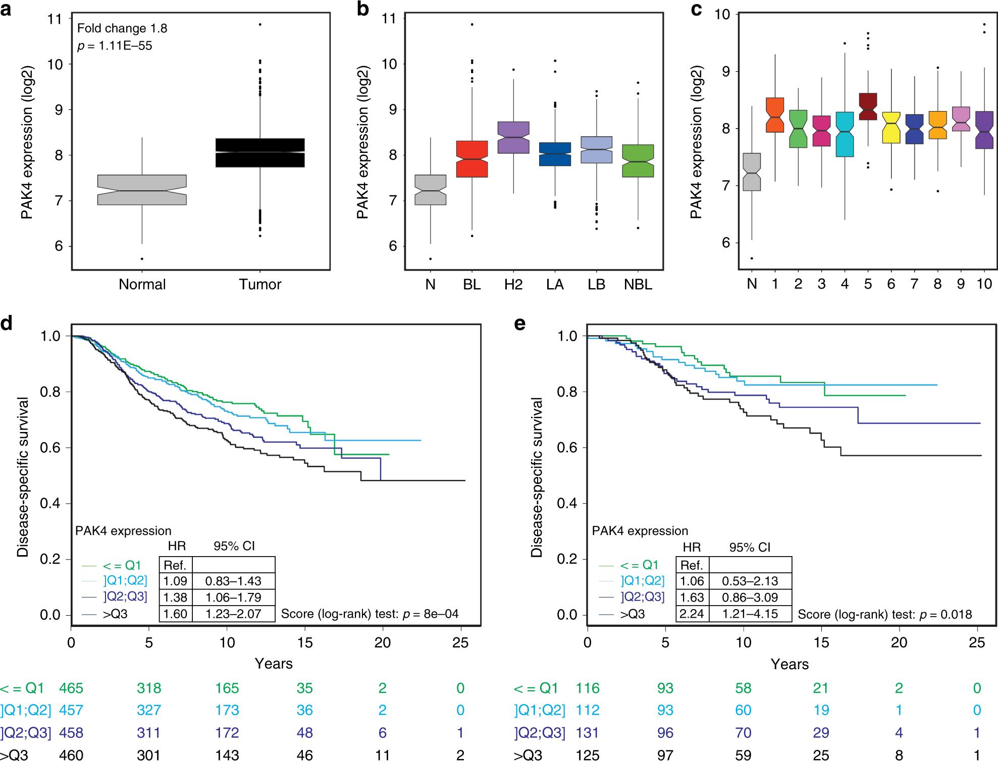 PAK4 suppresses RELB to prevent senescence-like growth