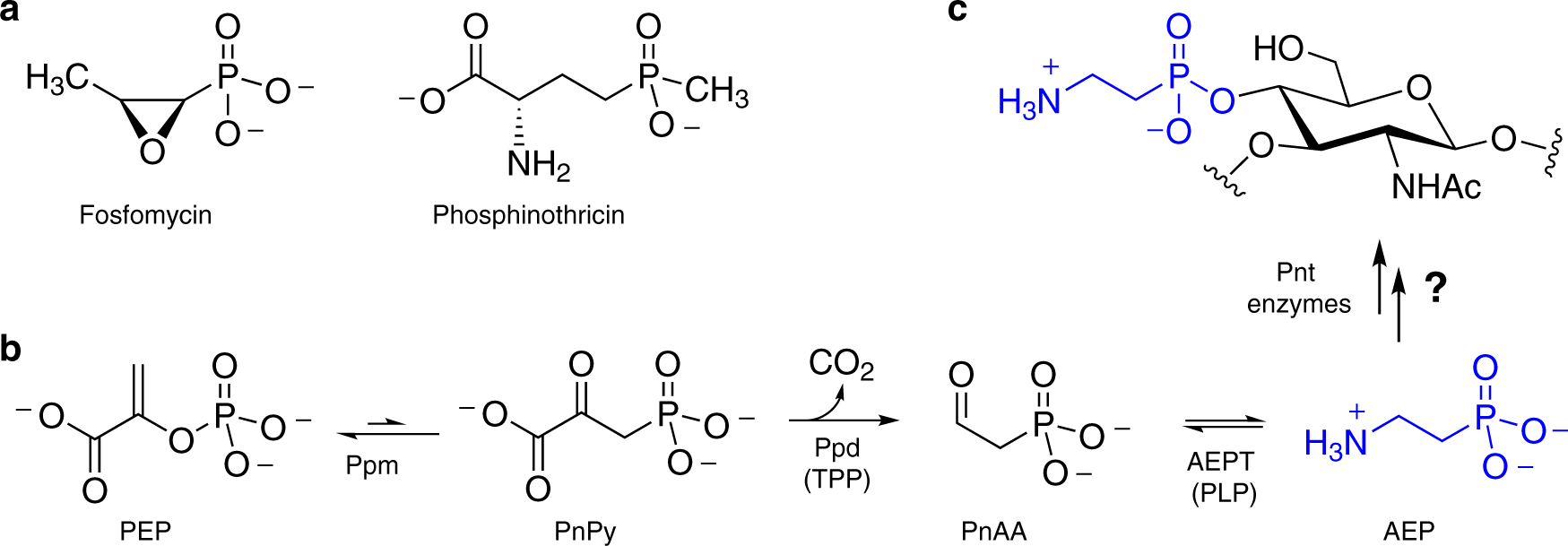 The predominance of nucleotidyl activation in bacterial