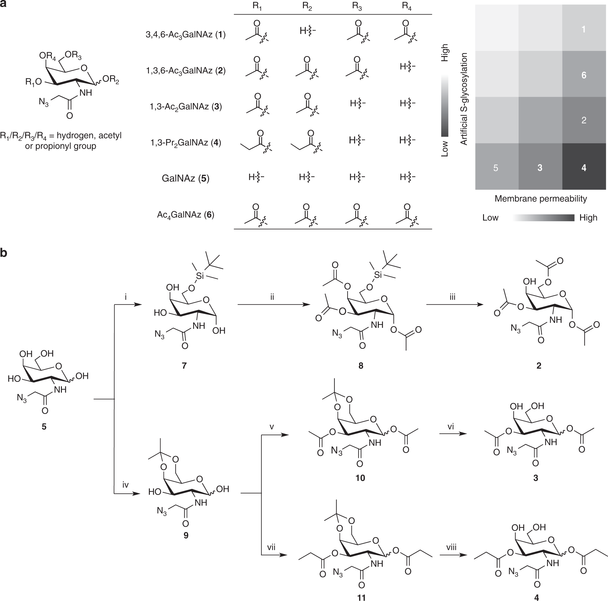 Next-generation unnatural monosaccharides reveal that ESRRB
