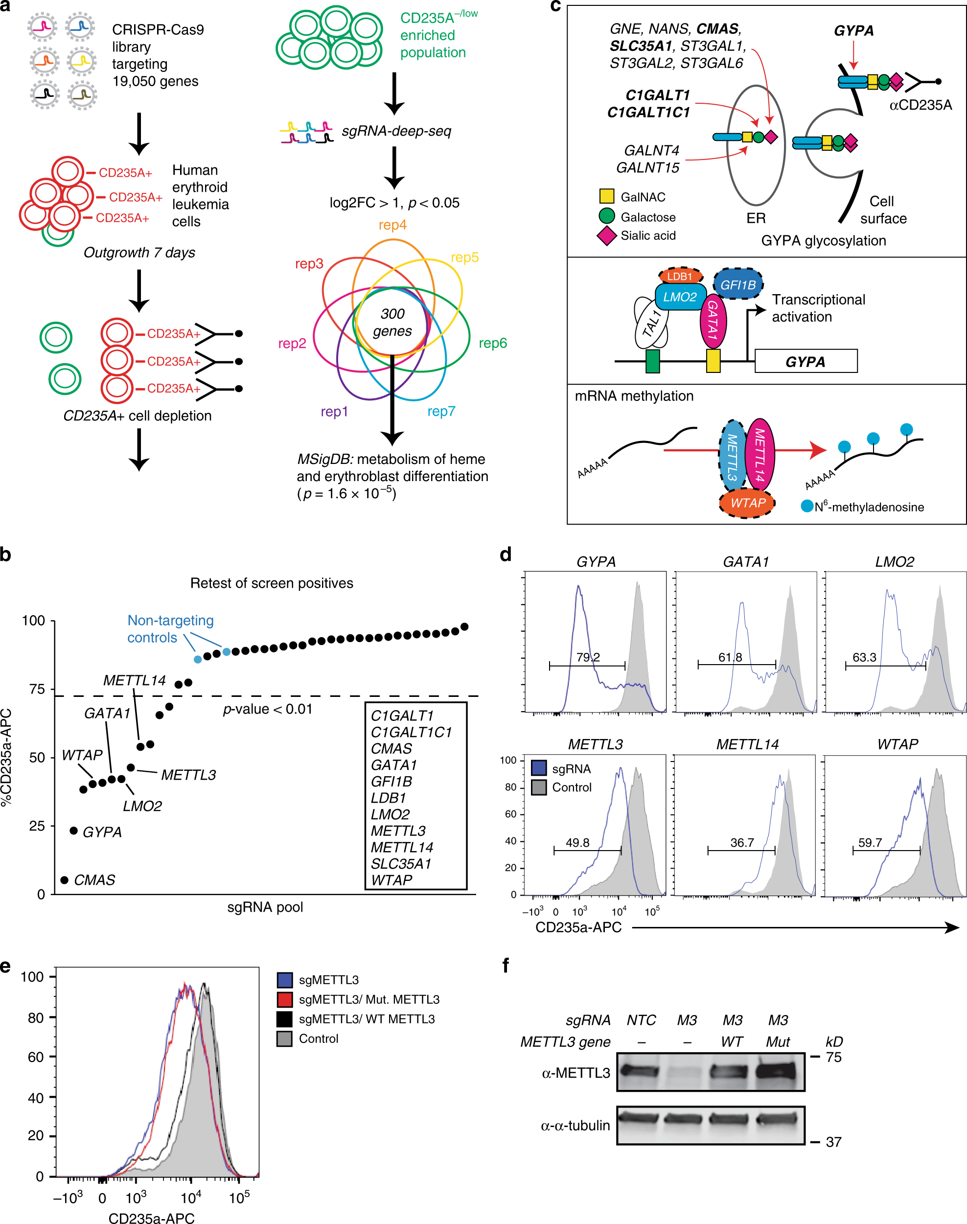 N 6 -methyladenosine mRNA marking promotes selective translation of re