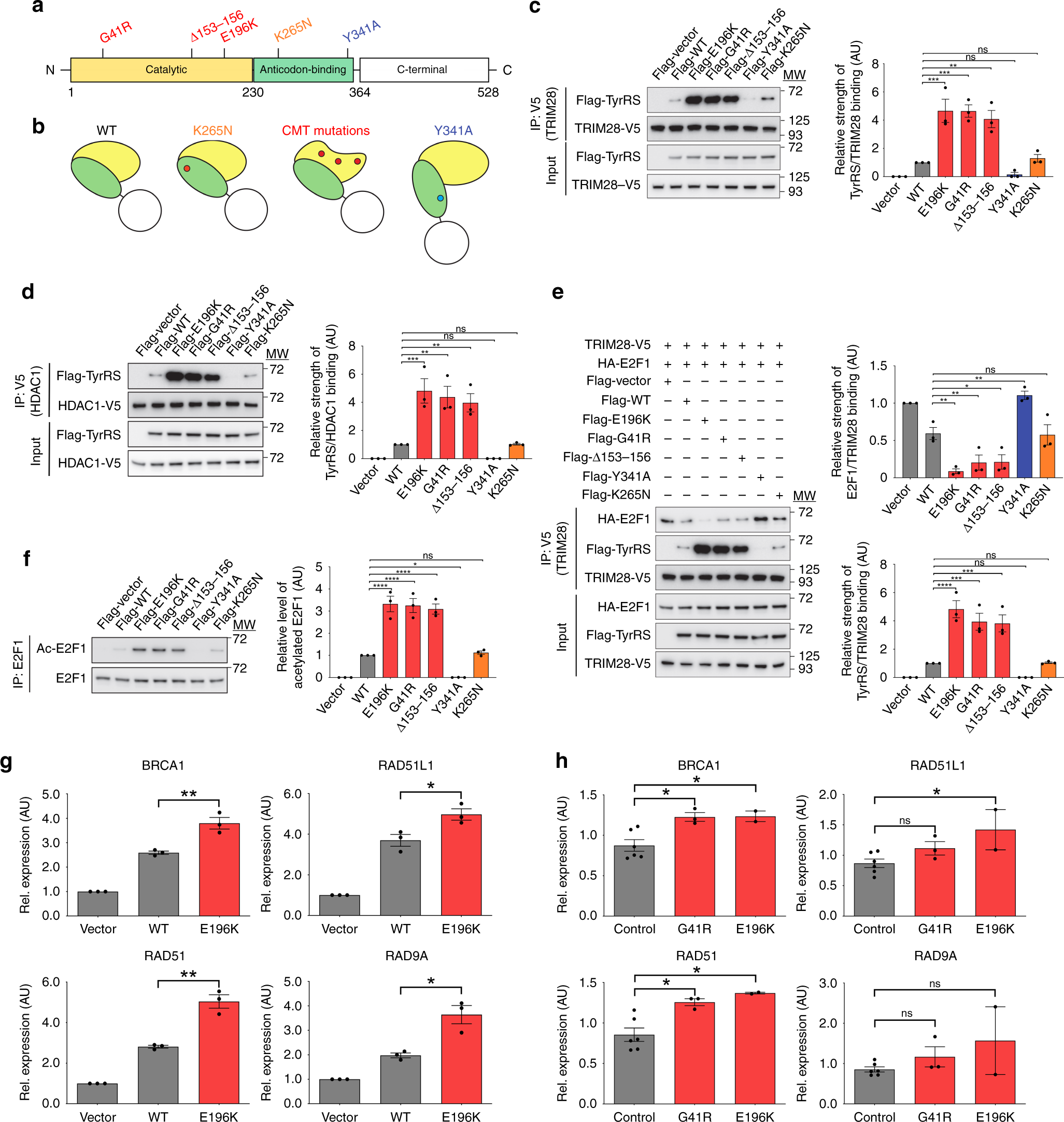Transcriptional Dysregulation By A Nucleus Localized