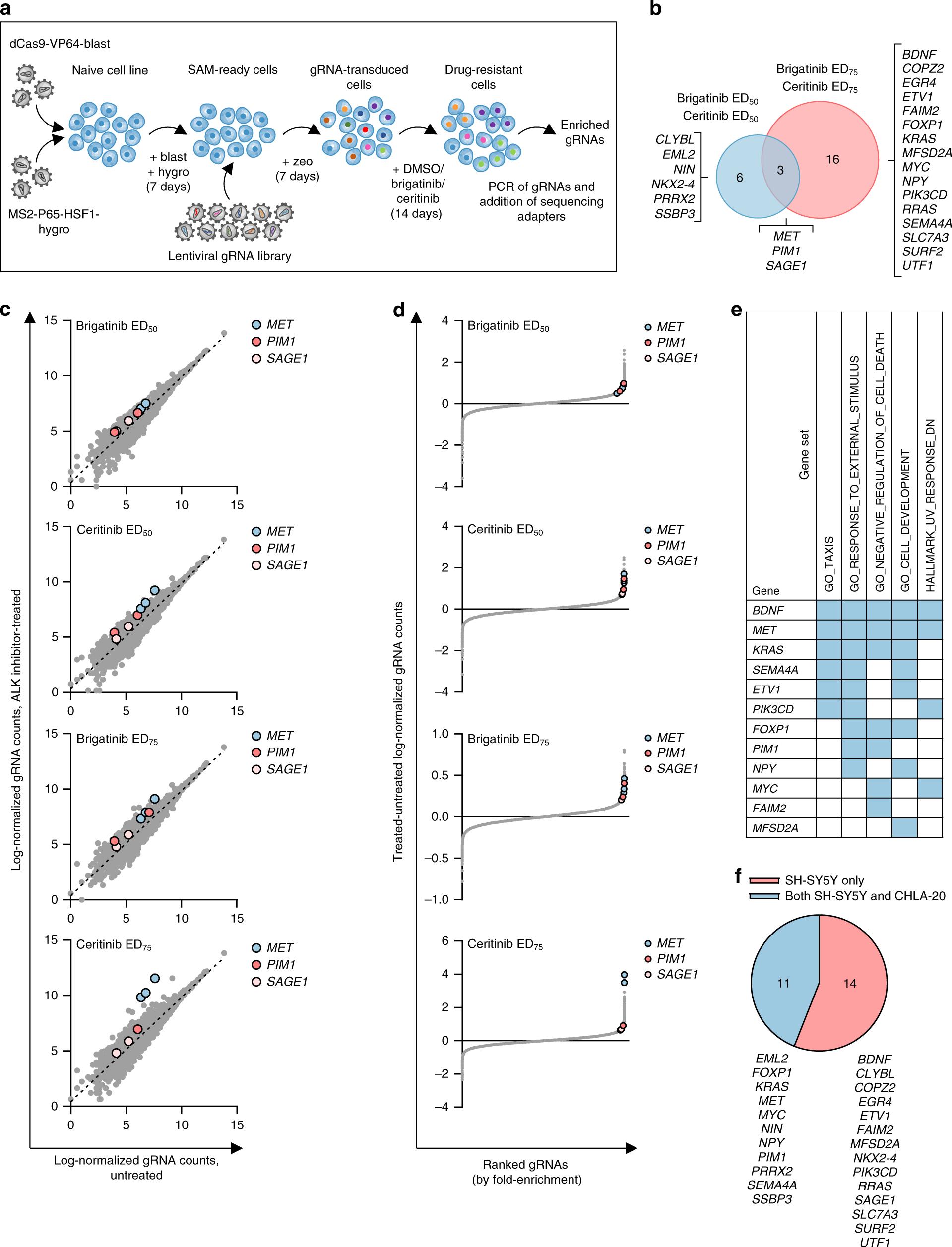 The Targetable Kinase Pim1 Drives Alk Inhibitor Resistance