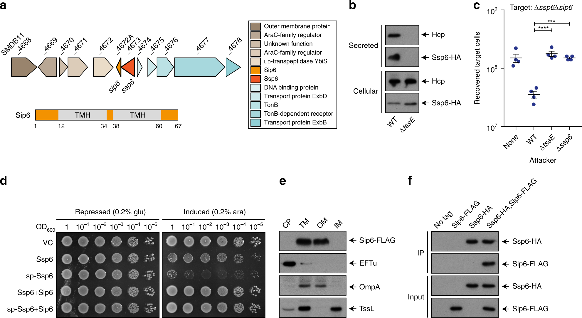 A family of Type VI secretion system effector proteins that ... on
