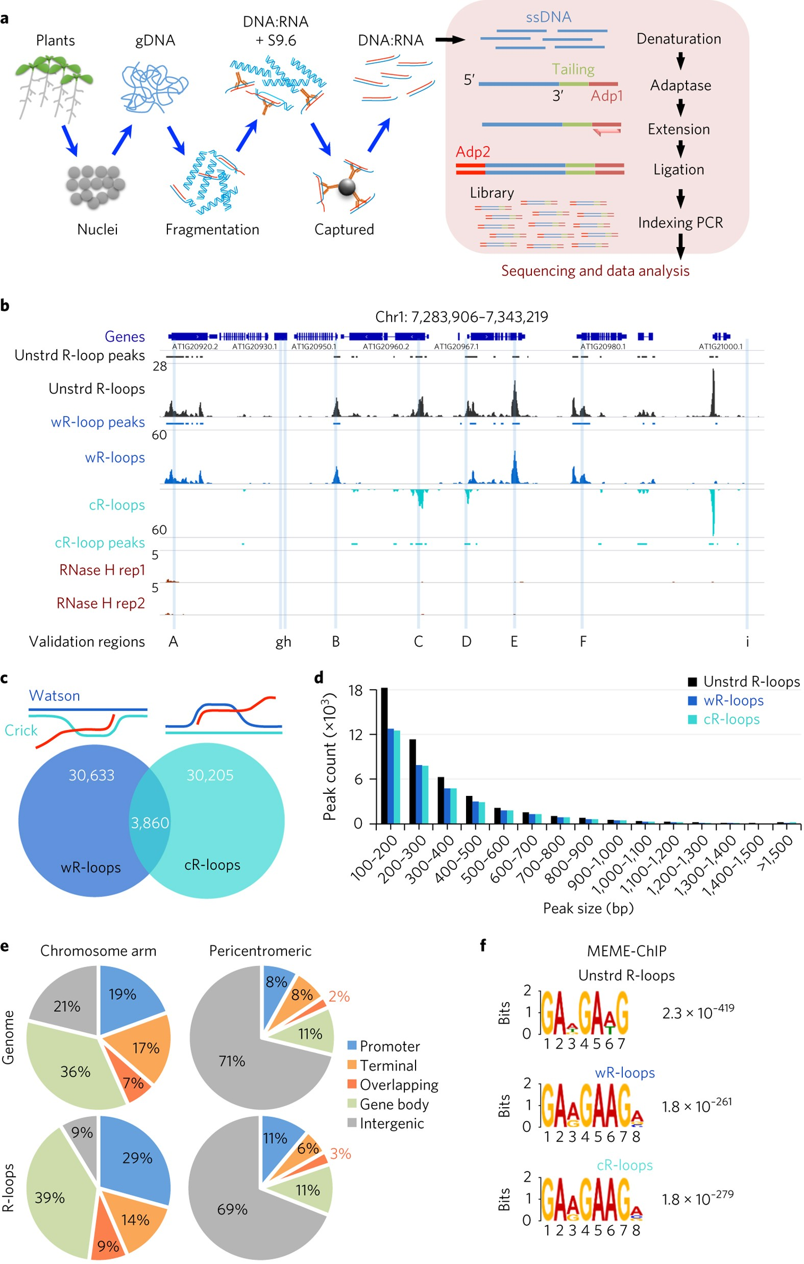 The R Loop Is A Common Chromatin Feature Of The Arabidopsis Genome