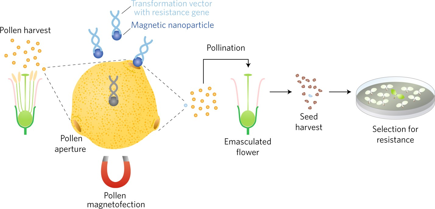 Loopholes for smuggling dna into pollen nature plants pooptronica