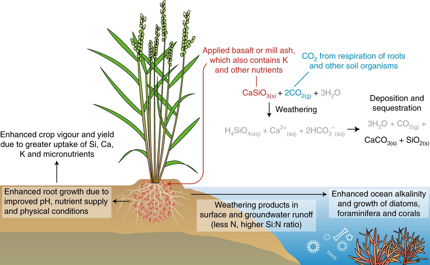 Farming with crops and rocks to address global climate, food