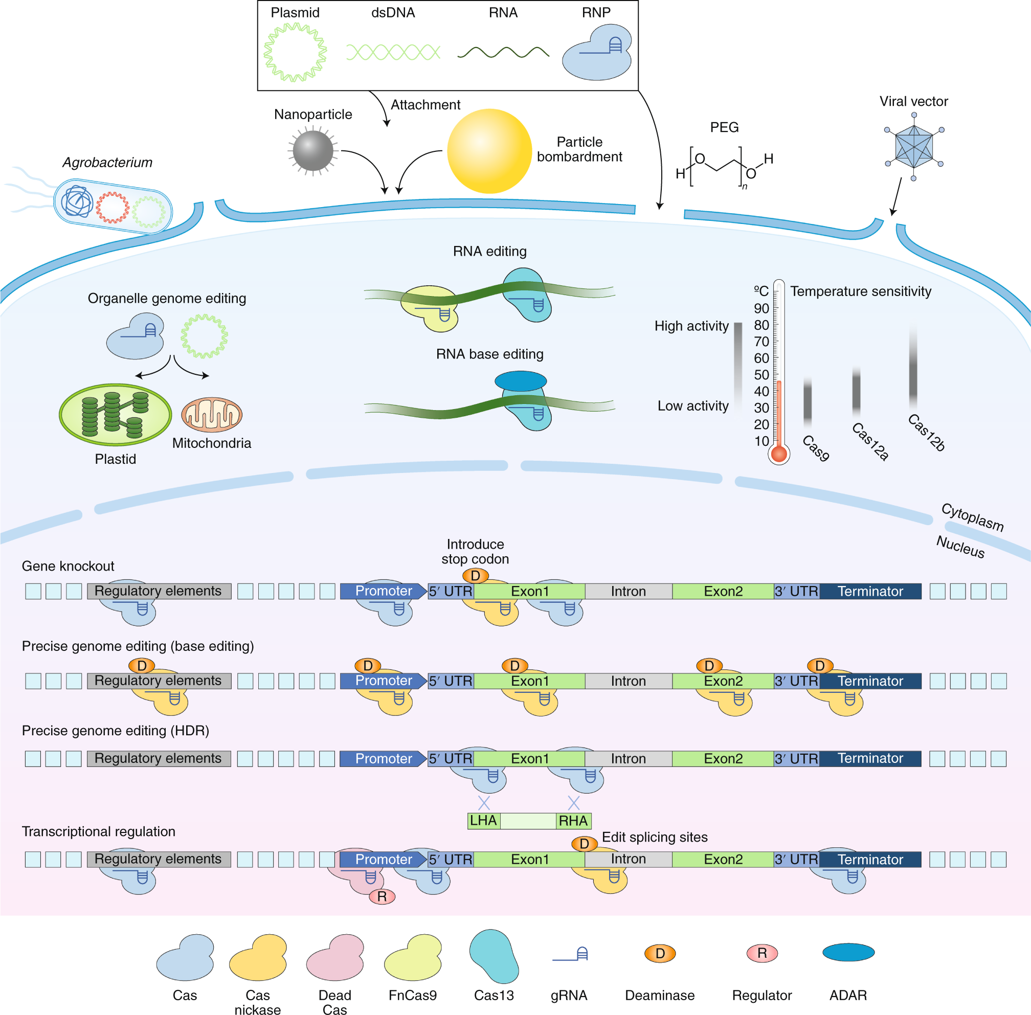 The emerging and uncultivated potential of CRISPR technology in plant