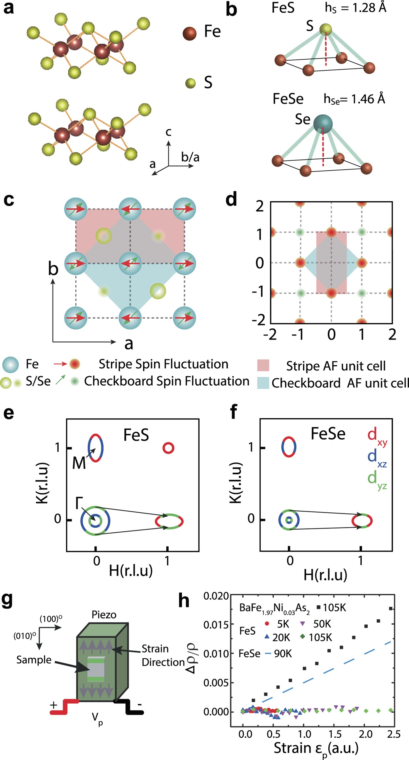 Spin excitations and the Fermi surface of superconducting FeS | npj