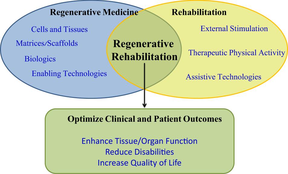 The convergence of regenerative medicine and rehabilitation: federal