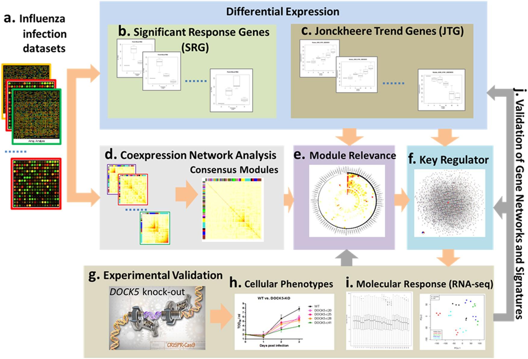 Integrative Gene Network Analysis Identifies Key Signatures