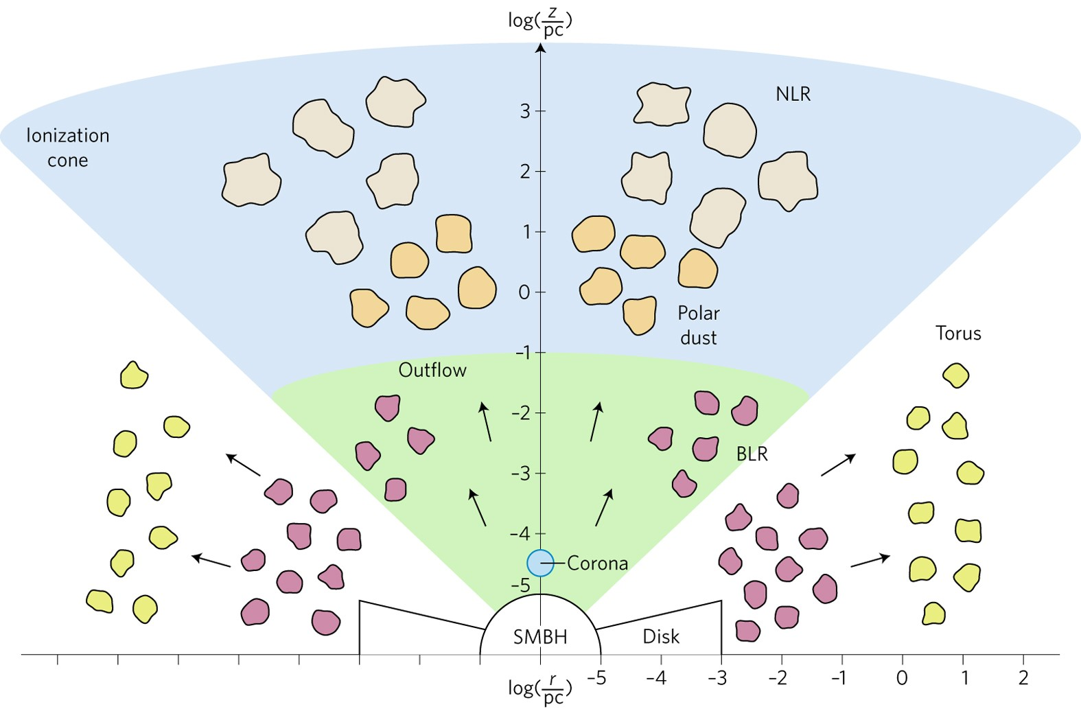 Nuclear Obscuration In Active Galactic Nuclei Nature Astronomy 134 F Head Engine Diagram