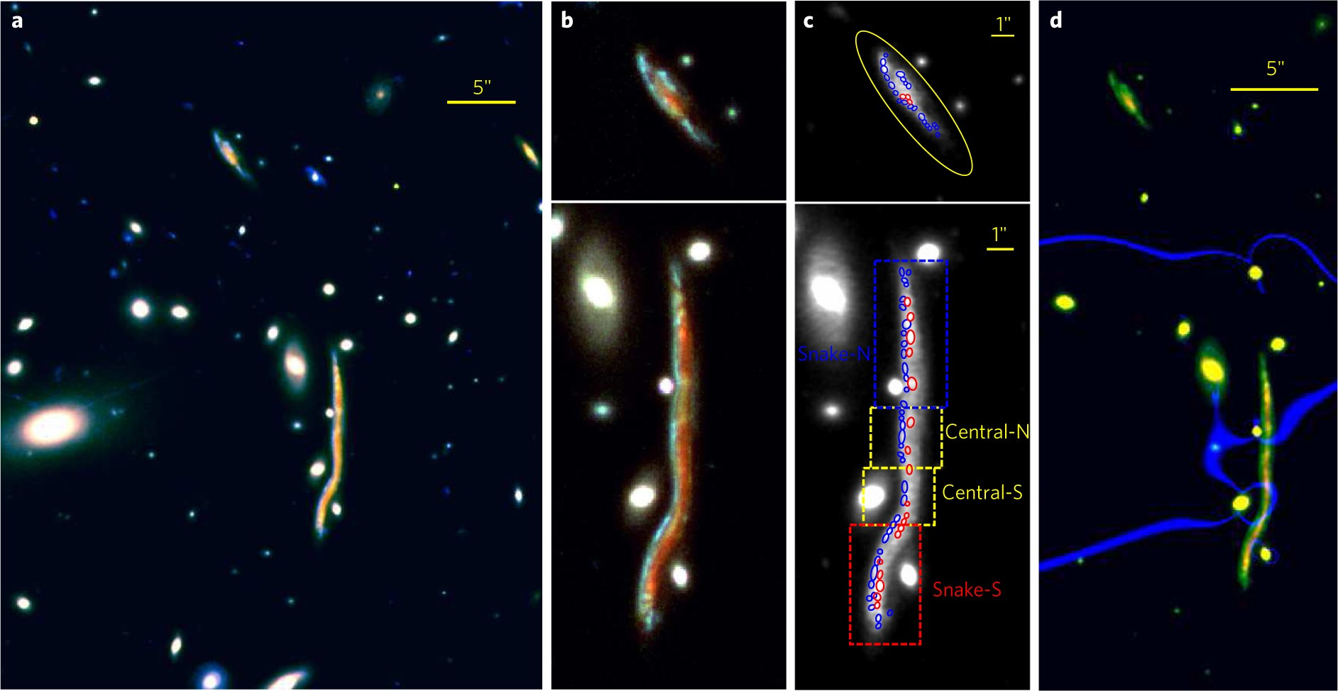 The Nature Of Giant Clumps In Distant Galaxies Probed By Anatomy Snake Diagram Image Search Results Cosmic Astronomy