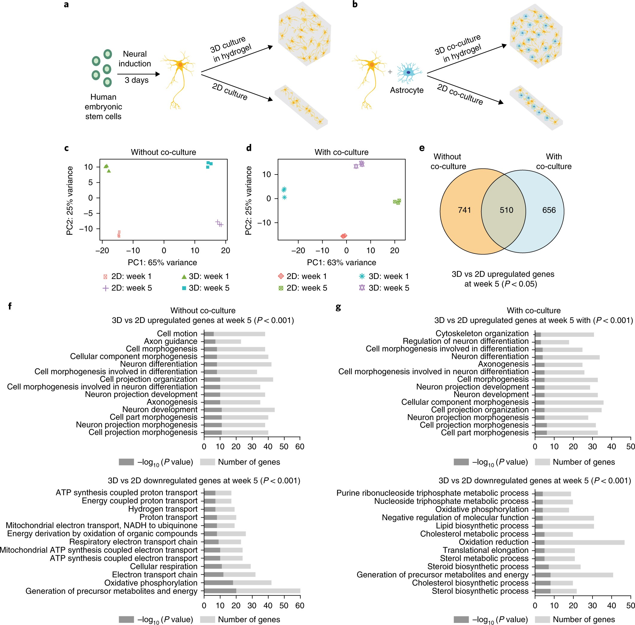 Effects of 3D culturing conditions on the transcriptomic profile of