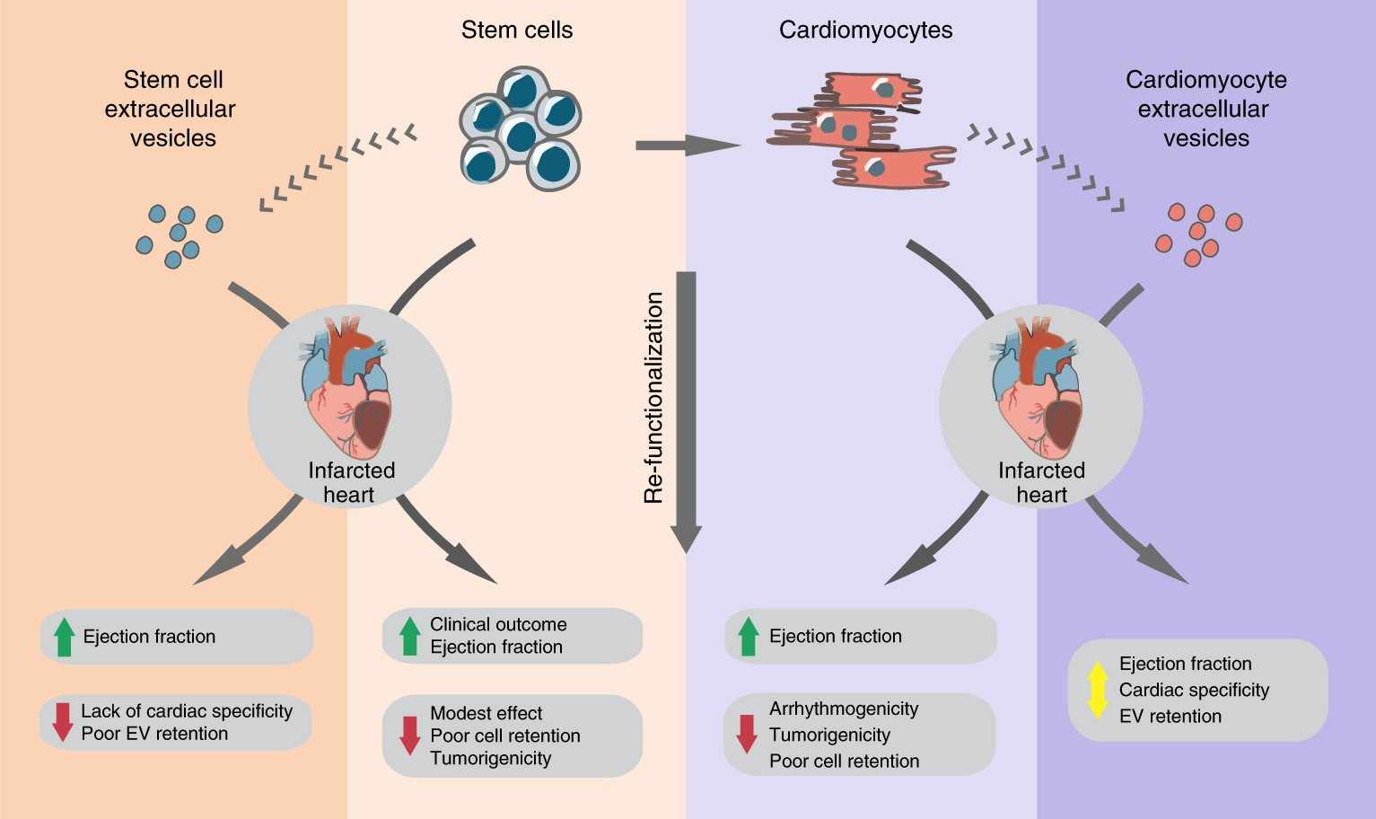 Cardiac Recovery Via Extended Cell Free Delivery Of Extracellular