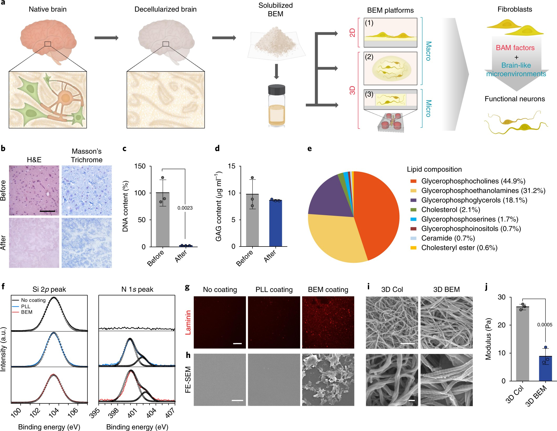 Three Dimensional Brain Like Microenvironments Facilitate The Direct Cable Tester Circuit Moreover Diagram Of A Schematic On Reprogramming Fibroblasts Into Therapeutic Neurons Nature Biomedical Engineering
