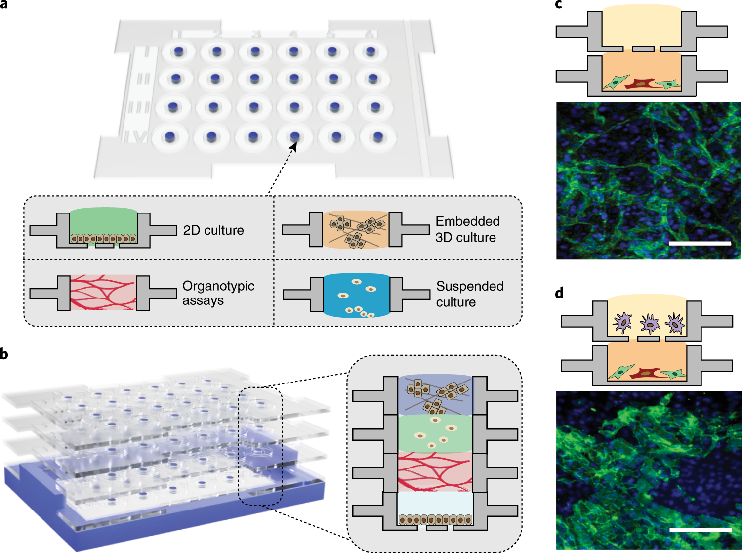 Reconfigurable open microfluidics for studying the spatiotemporal dyna