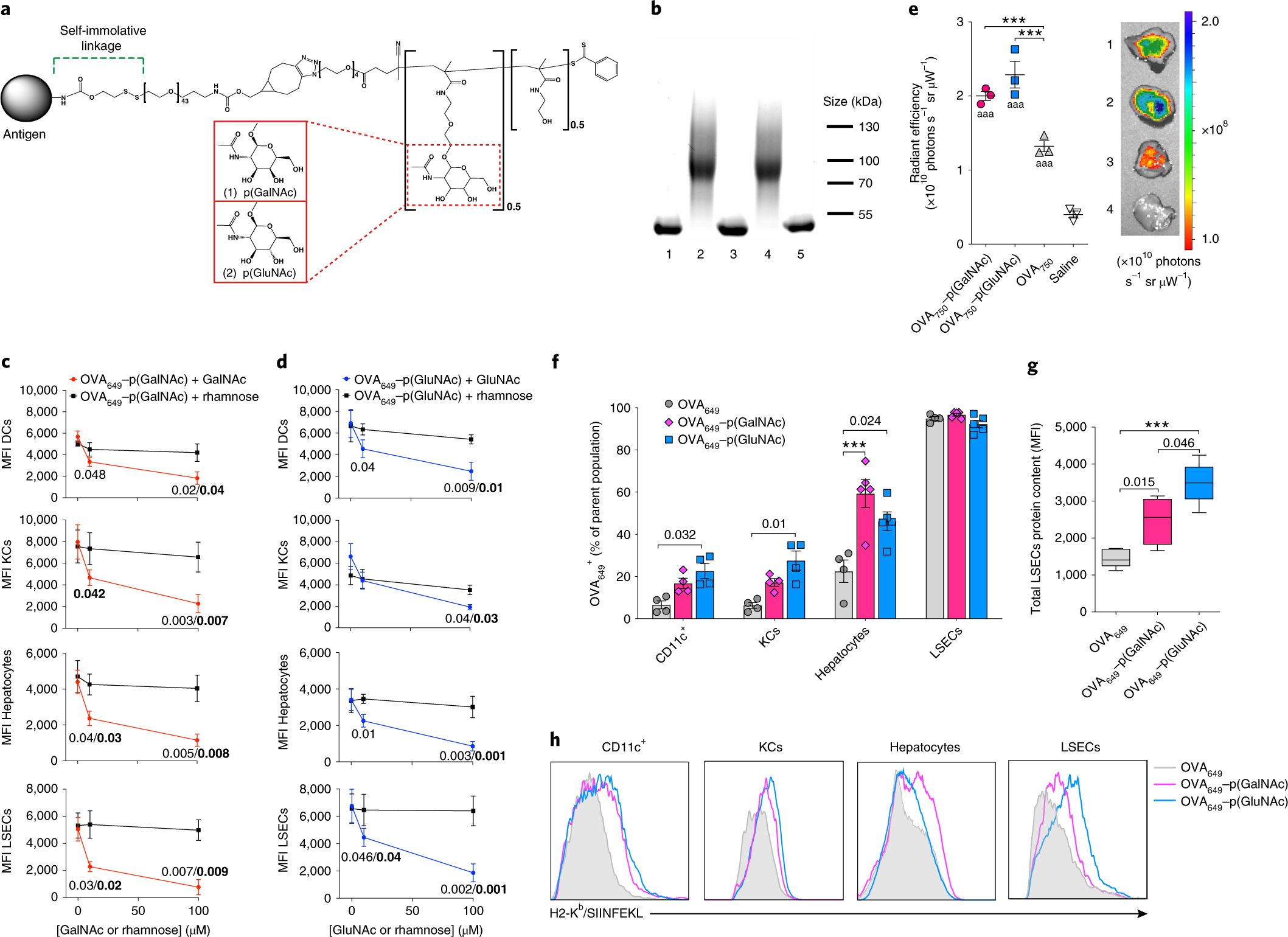 Synthetically glycosylated antigens induce antigen-specific tolerance