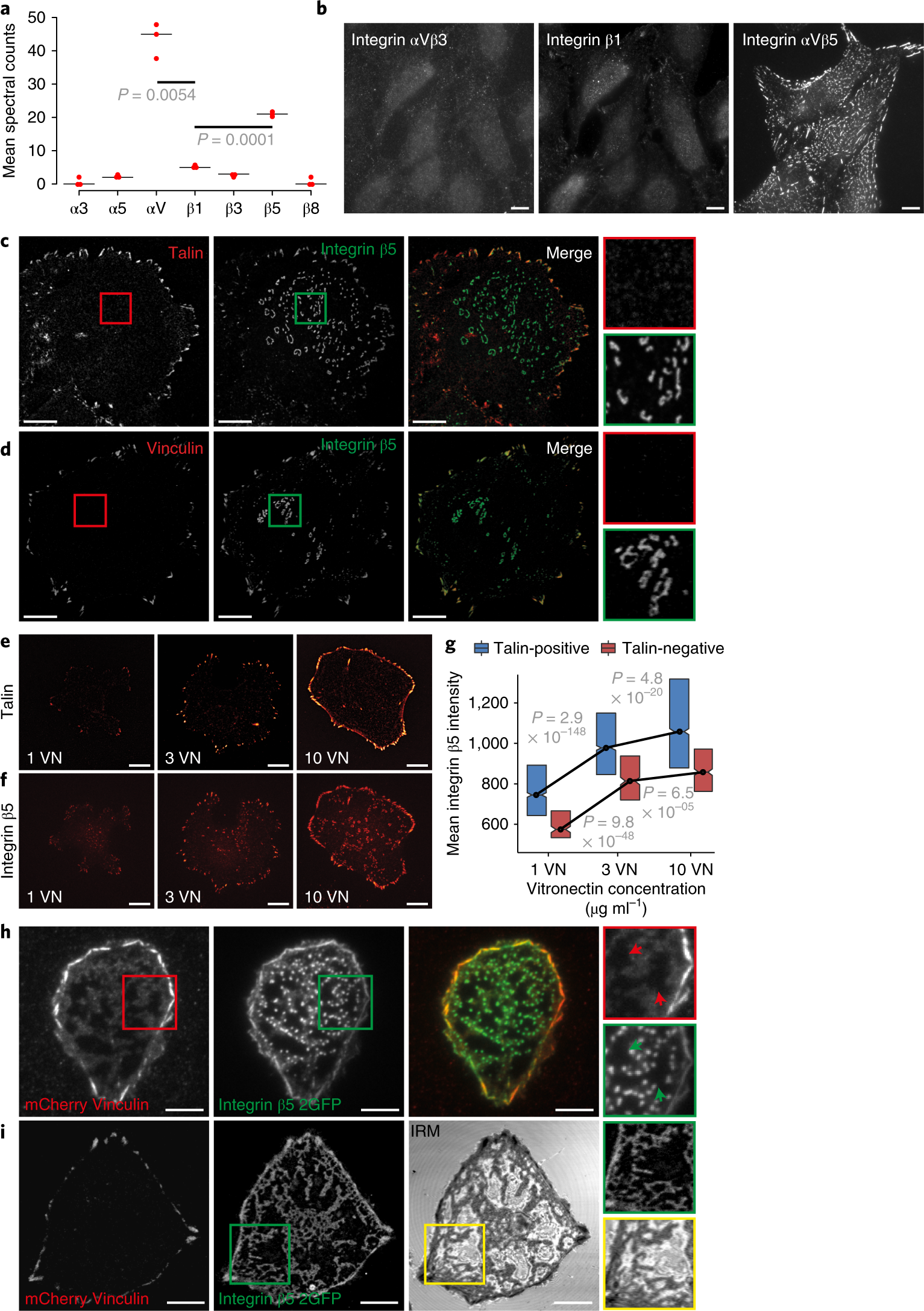 Reticular adhesions are a distinct class of cell-matrix