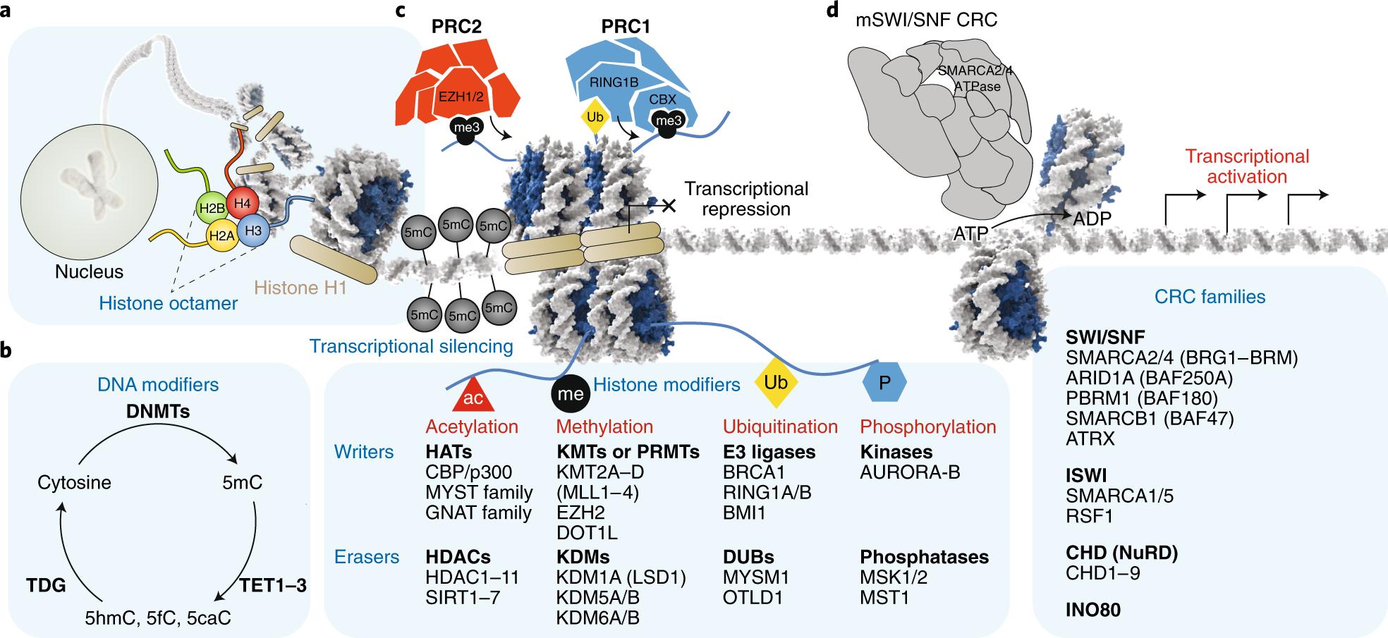 Chromatin regulatory mechanisms and therapeutic