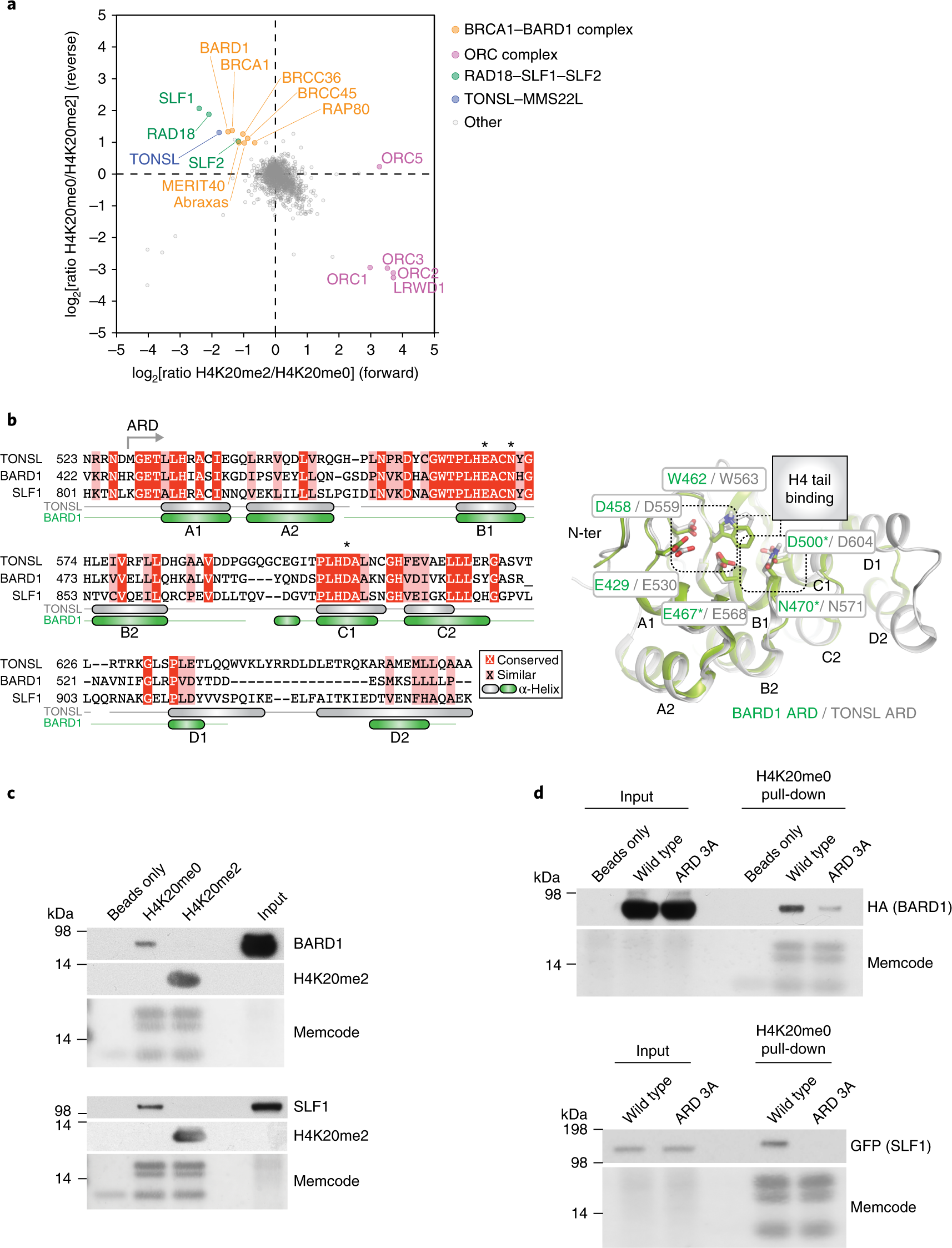 H4K20me0 recognition by BRCA1–BARD1 directs homologous recombination