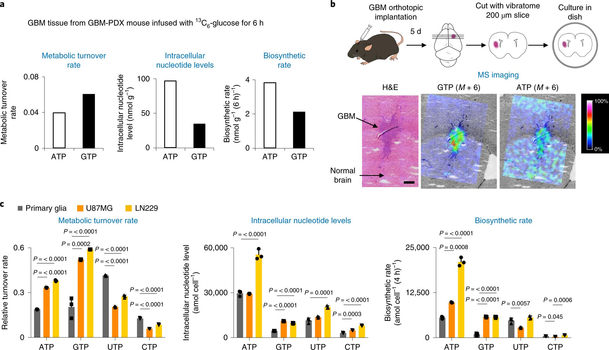 IMP dehydrogenase-2 drives aberrant nucleolar activity and