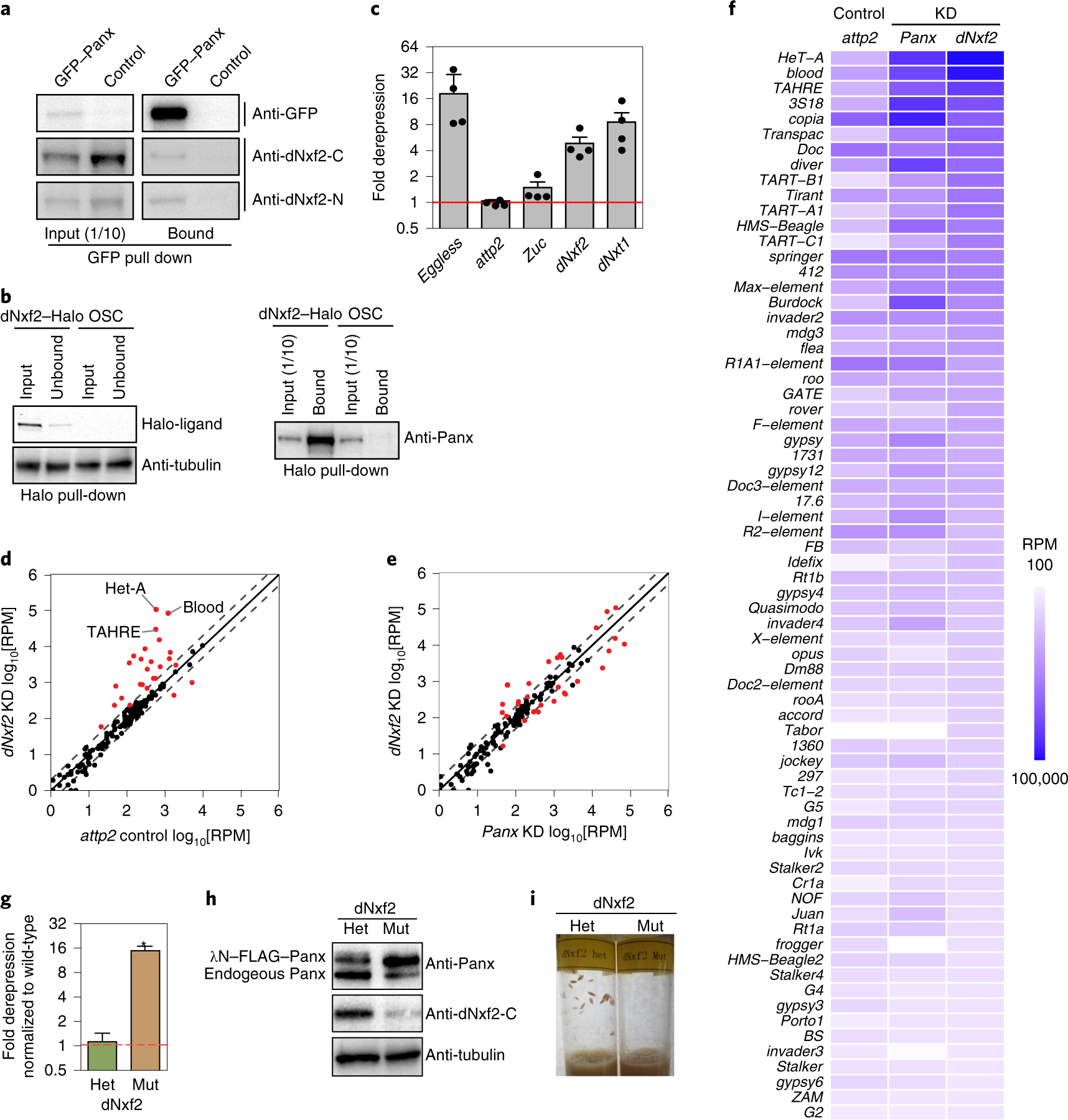 A Pandas complex adapted for piRNA-guided transcriptional silencing an