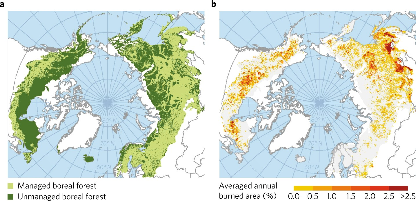 a sensible climate solution for the boreal forest nature climate