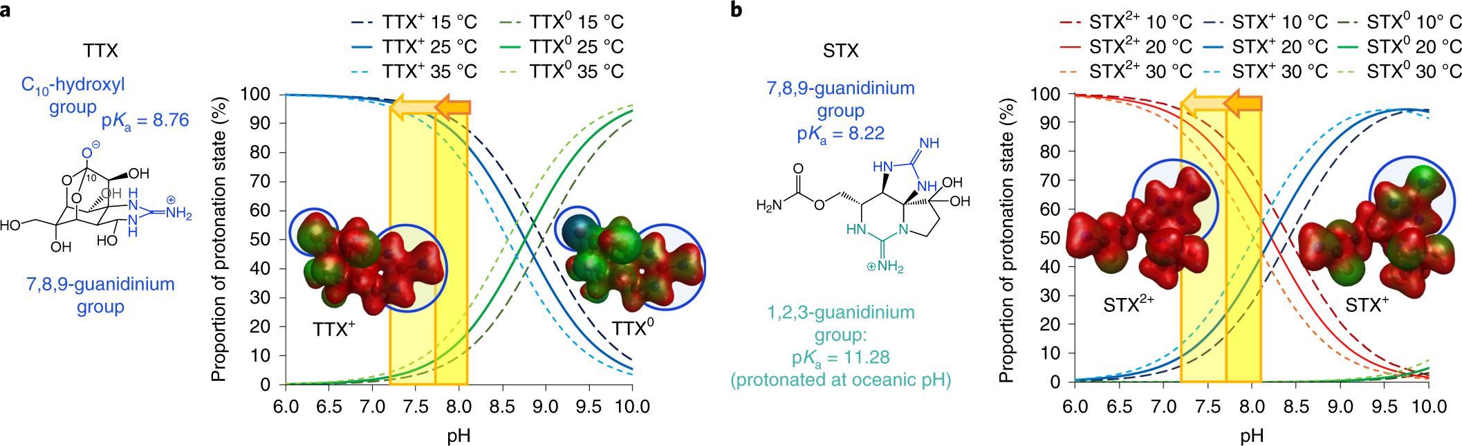 Saxitoxin and tetrodotoxin bioavailability increases in future oceans