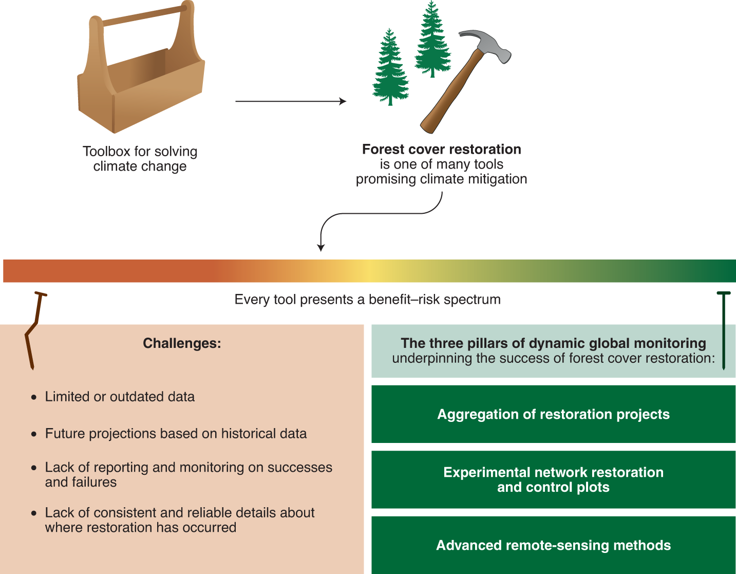 Dynamic global monitoring needed to use restoration of forest cover as