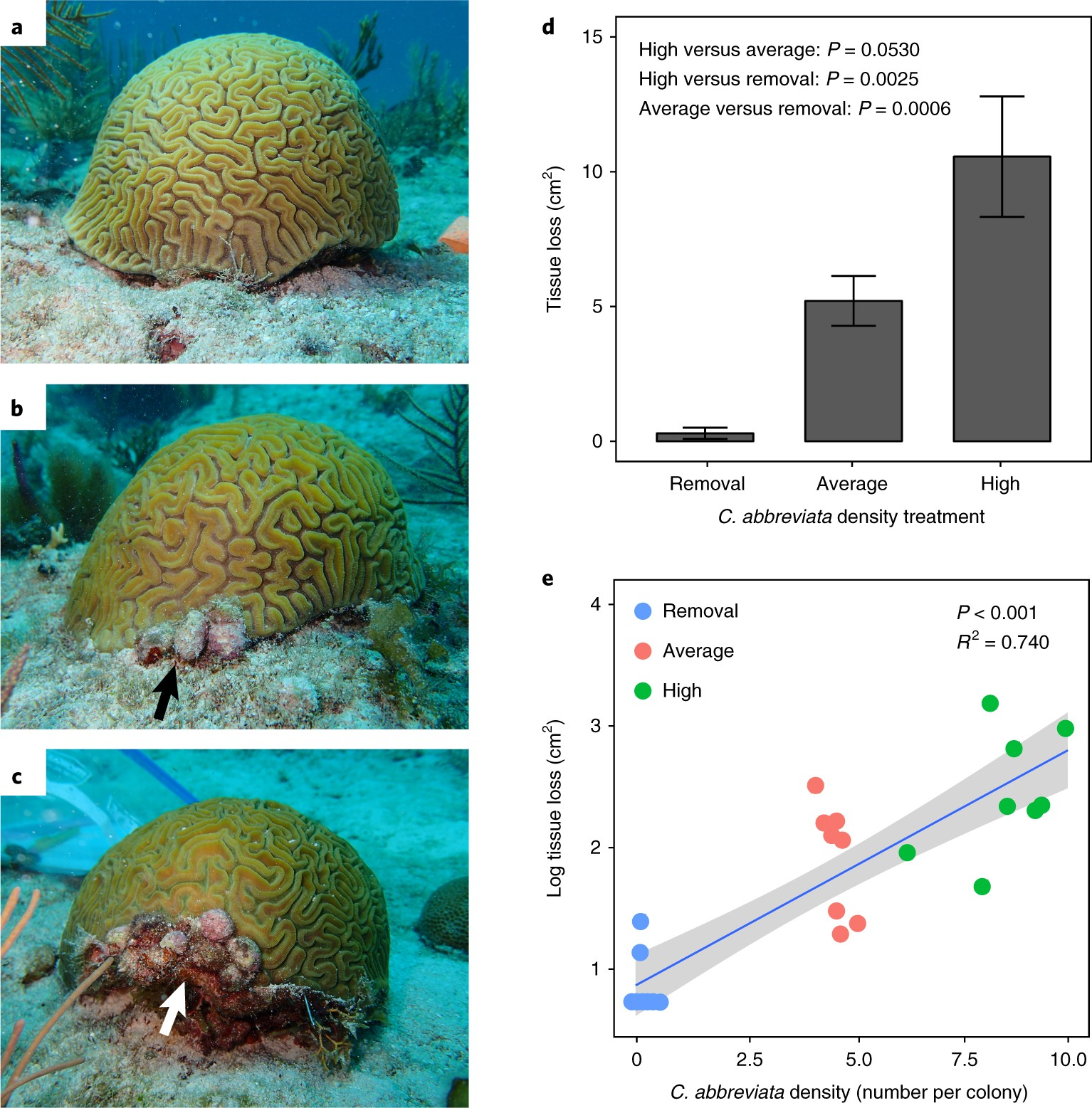Local management actions can increase coral resilience to