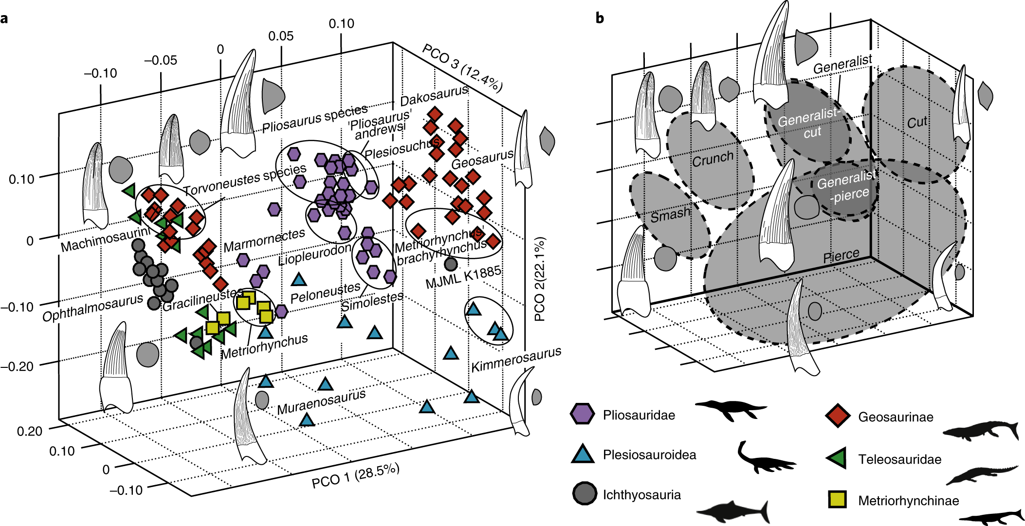 The long-term ecology and evolution of marine reptiles in a Jurassic seaway   bab57697a