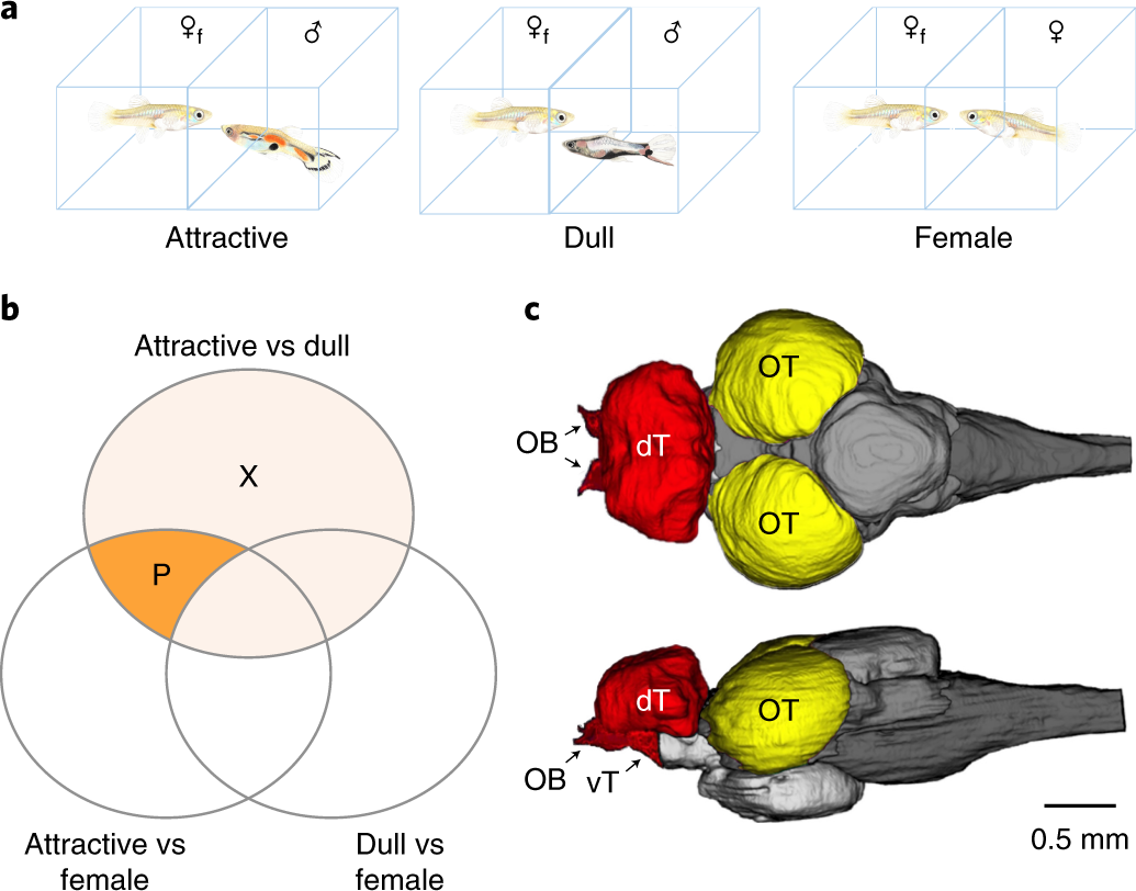 Early Neurogenomic Response Associated With Variation In Guppy Outlining Flex Circuits Integral Fingers Manufacturing Processes Female Mate Preference Nature Ecology Evolution
